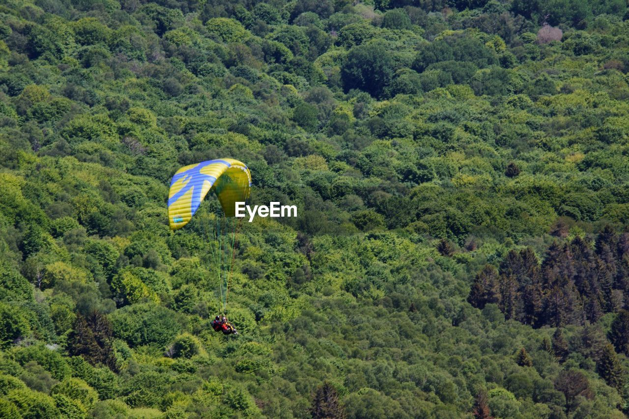 green color, adventure, tree, parachute, day, flying, extreme sports, outdoors, nature, growth, hot air balloon, multi colored, beauty in nature, no people, paragliding