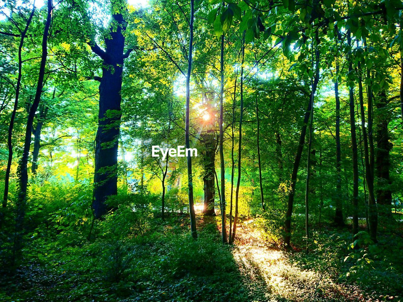 forest, tree, nature, tranquility, growth, tranquil scene, beauty in nature, scenics, no people, outdoors, day, landscape