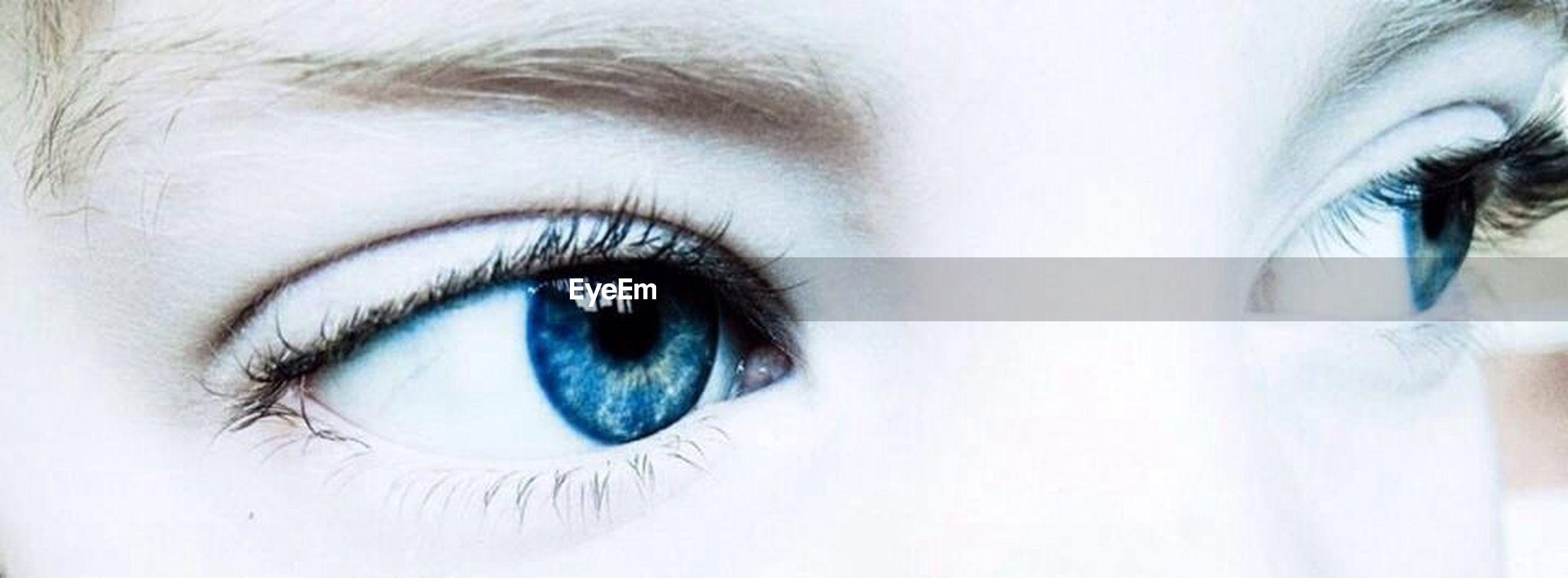 human eye, eyelash, looking at camera, close-up, eyesight, portrait, sensory perception, eyeball, human face, iris - eye, headshot, part of, lifestyles, extreme close-up, human skin, eyebrow, indoors