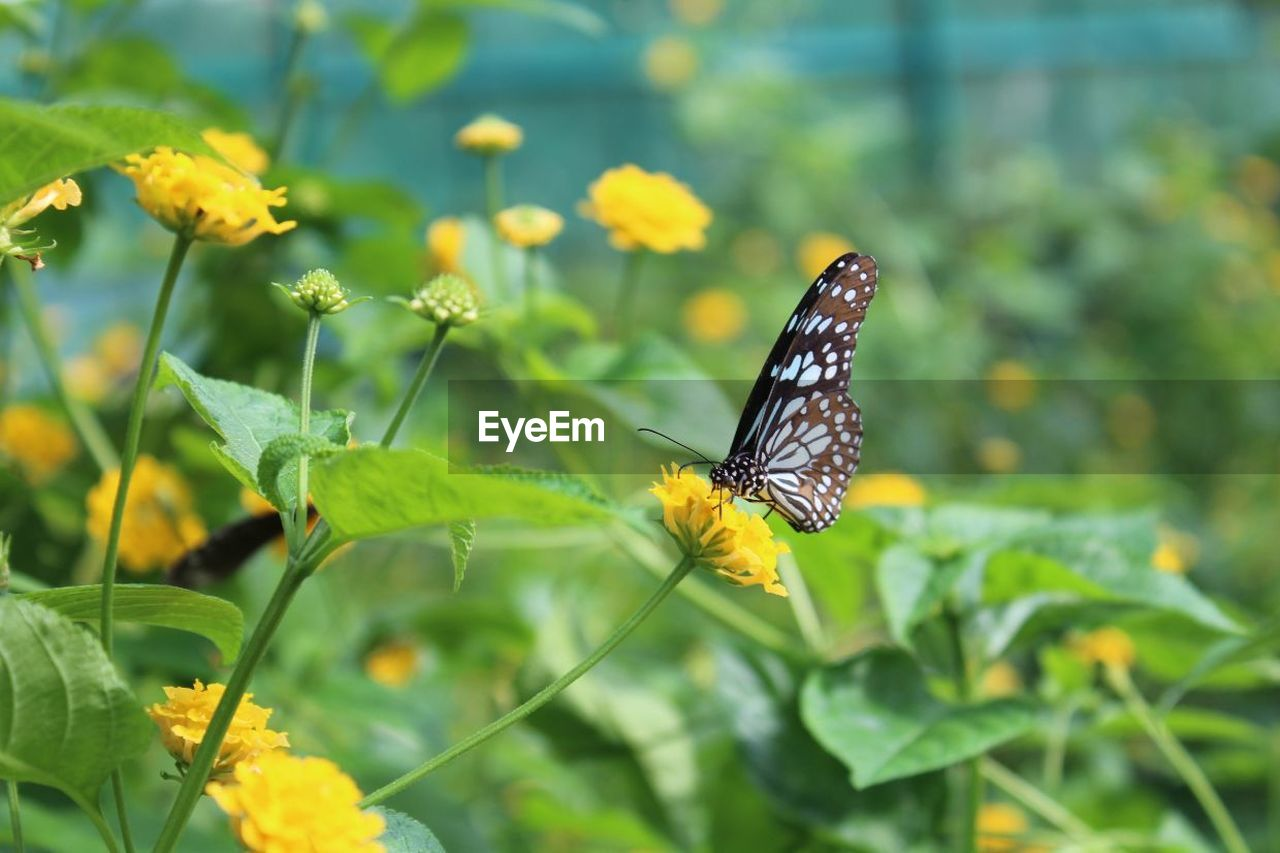 insect, one animal, animal themes, animals in the wild, nature, plant, butterfly - insect, beauty in nature, leaf, no people, butterfly, growth, day, outdoors, animal wildlife, yellow, focus on foreground, flower, green color, fragility, freshness, close-up, spread wings, perching