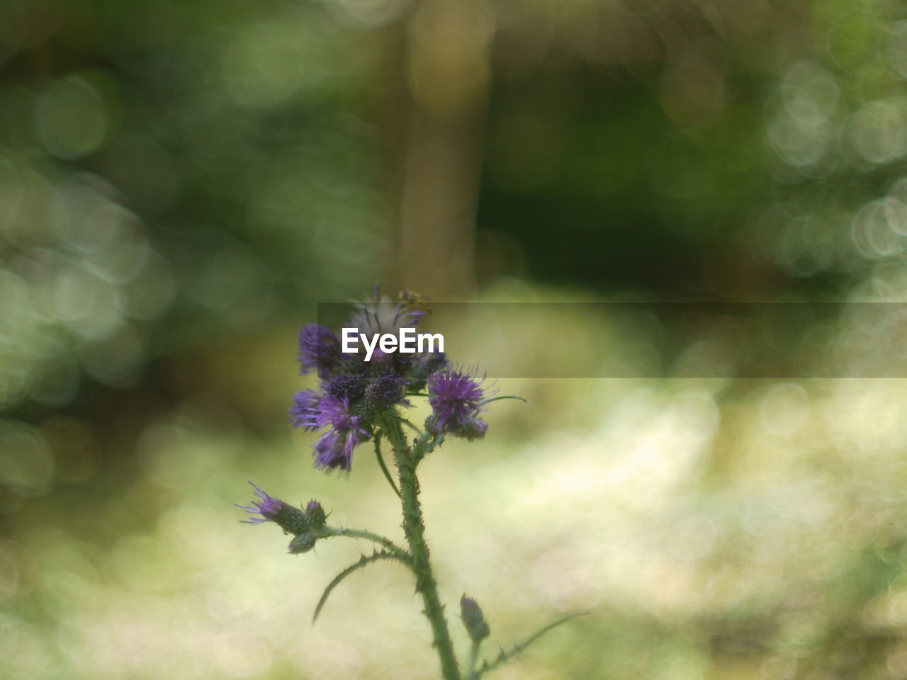 flower, flowering plant, plant, beauty in nature, fragility, vulnerability, freshness, close-up, growth, nature, focus on foreground, petal, no people, day, inflorescence, selective focus, flower head, outdoors, purple, sunlight