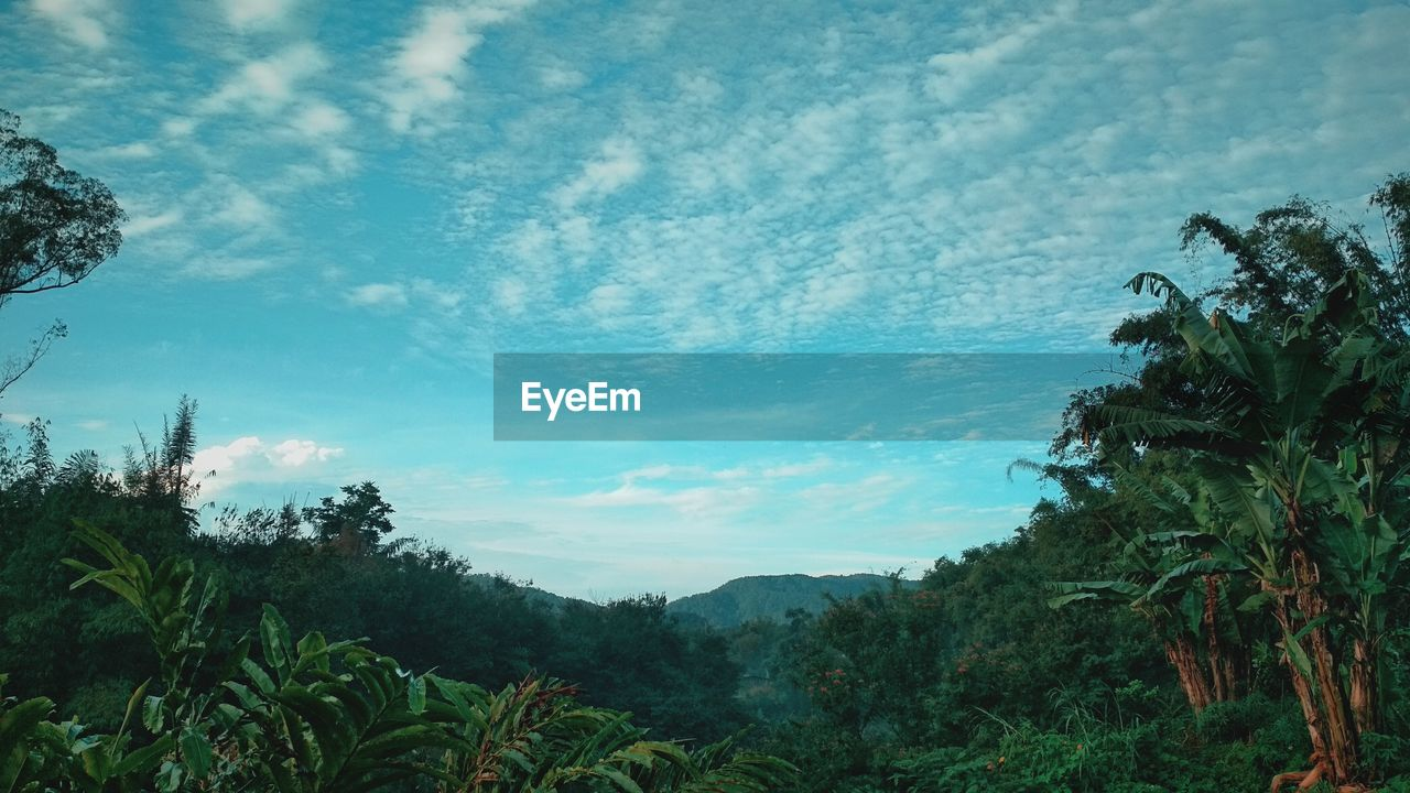tree, nature, sky, growth, beauty in nature, tranquility, scenics, tranquil scene, day, no people, cloud - sky, outdoors, plant, low angle view, mountain, landscape