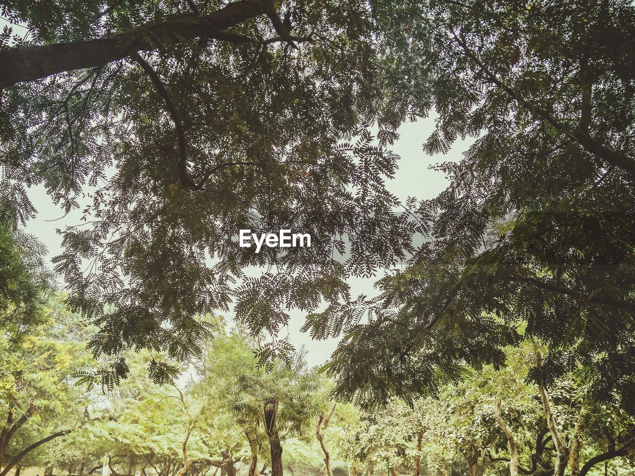 tree, low angle view, nature, day, growth, real people, outdoors, forest, beauty in nature, branch, sky, scenics