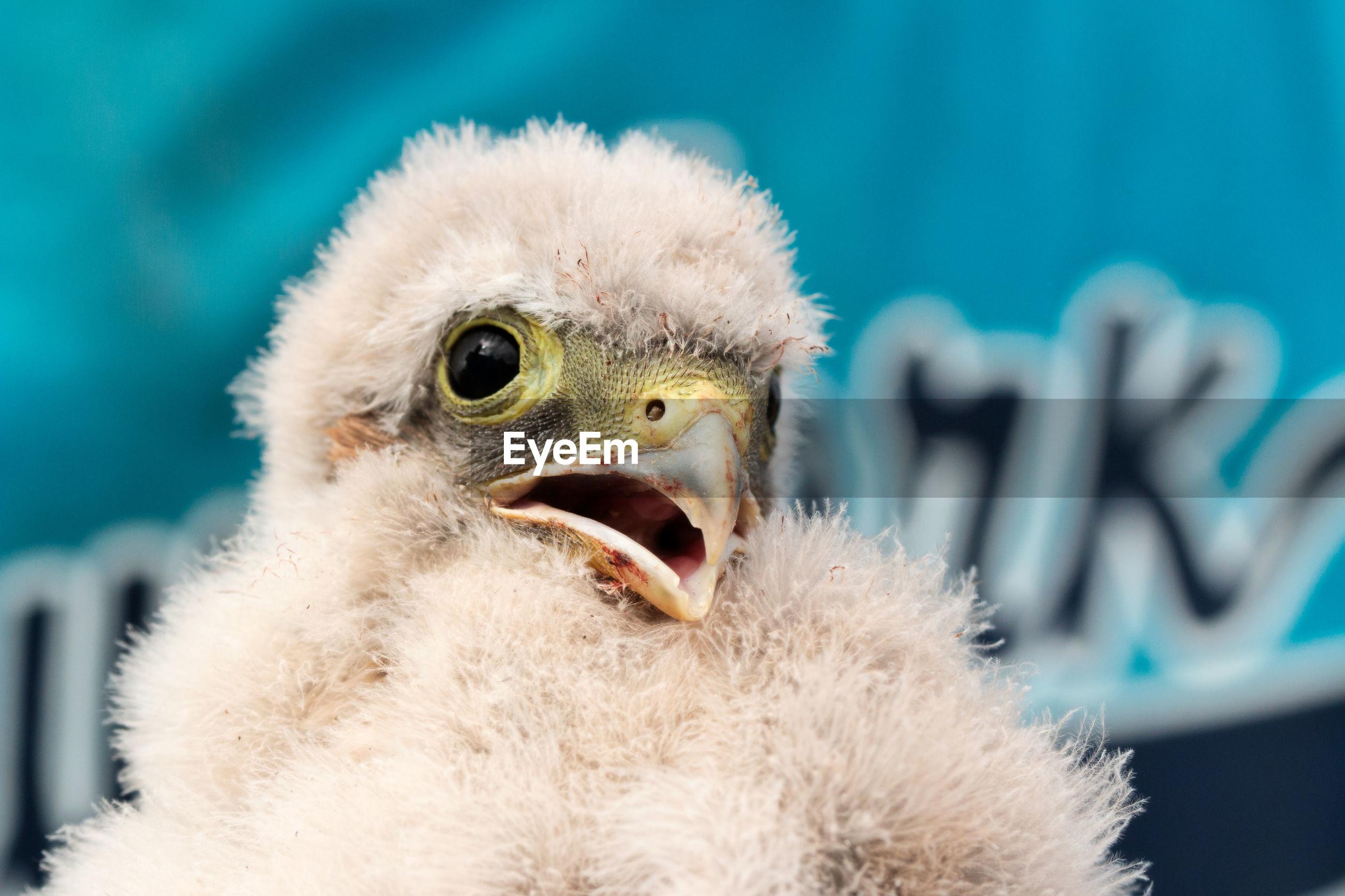 Close-up of young bird looking away