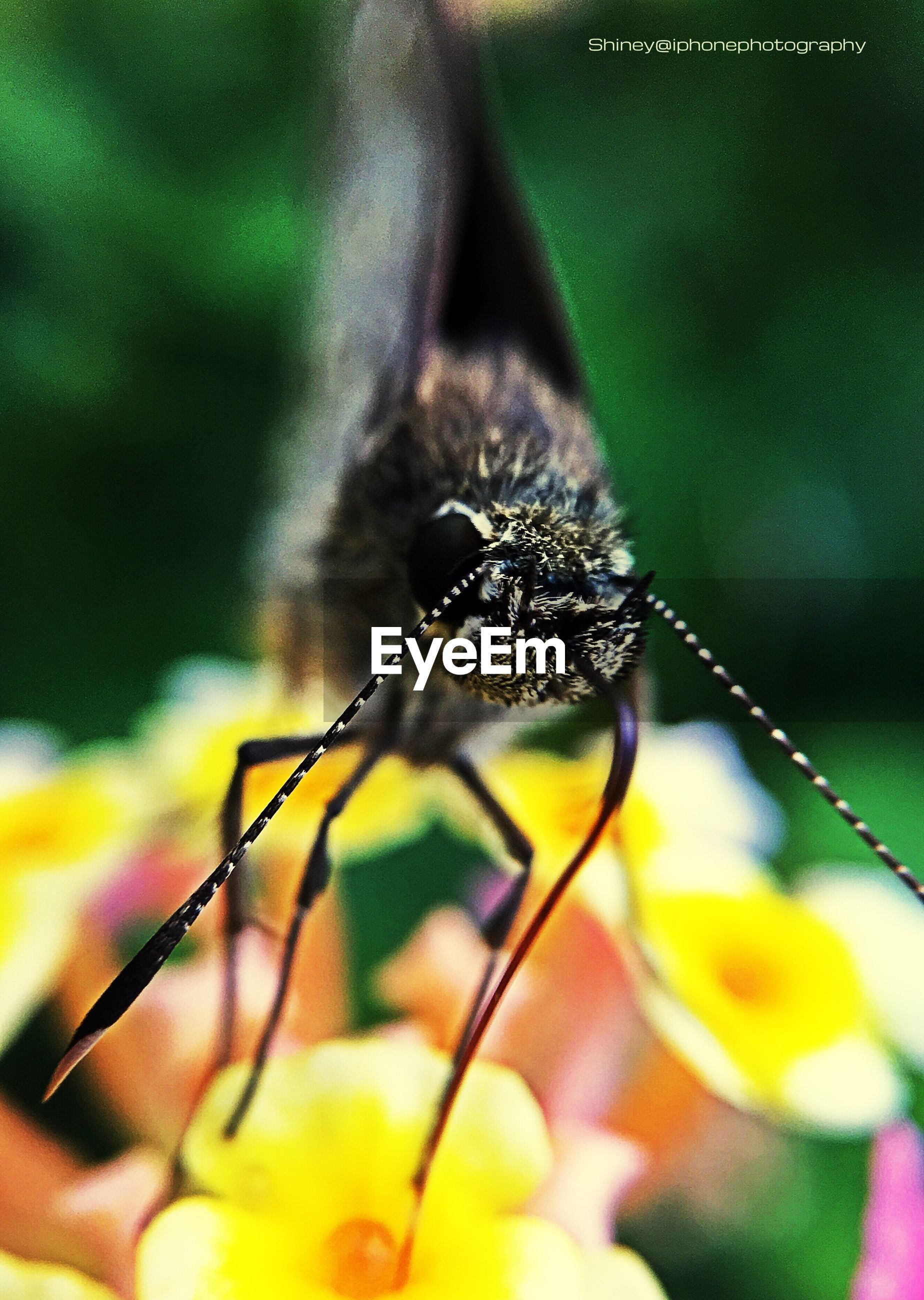 insect, one animal, animal themes, animals in the wild, wildlife, focus on foreground, close-up, spider, selective focus, nature, spider web, fragility, day, outdoors, arthropod, beauty in nature, no people, plant, zoology, flower