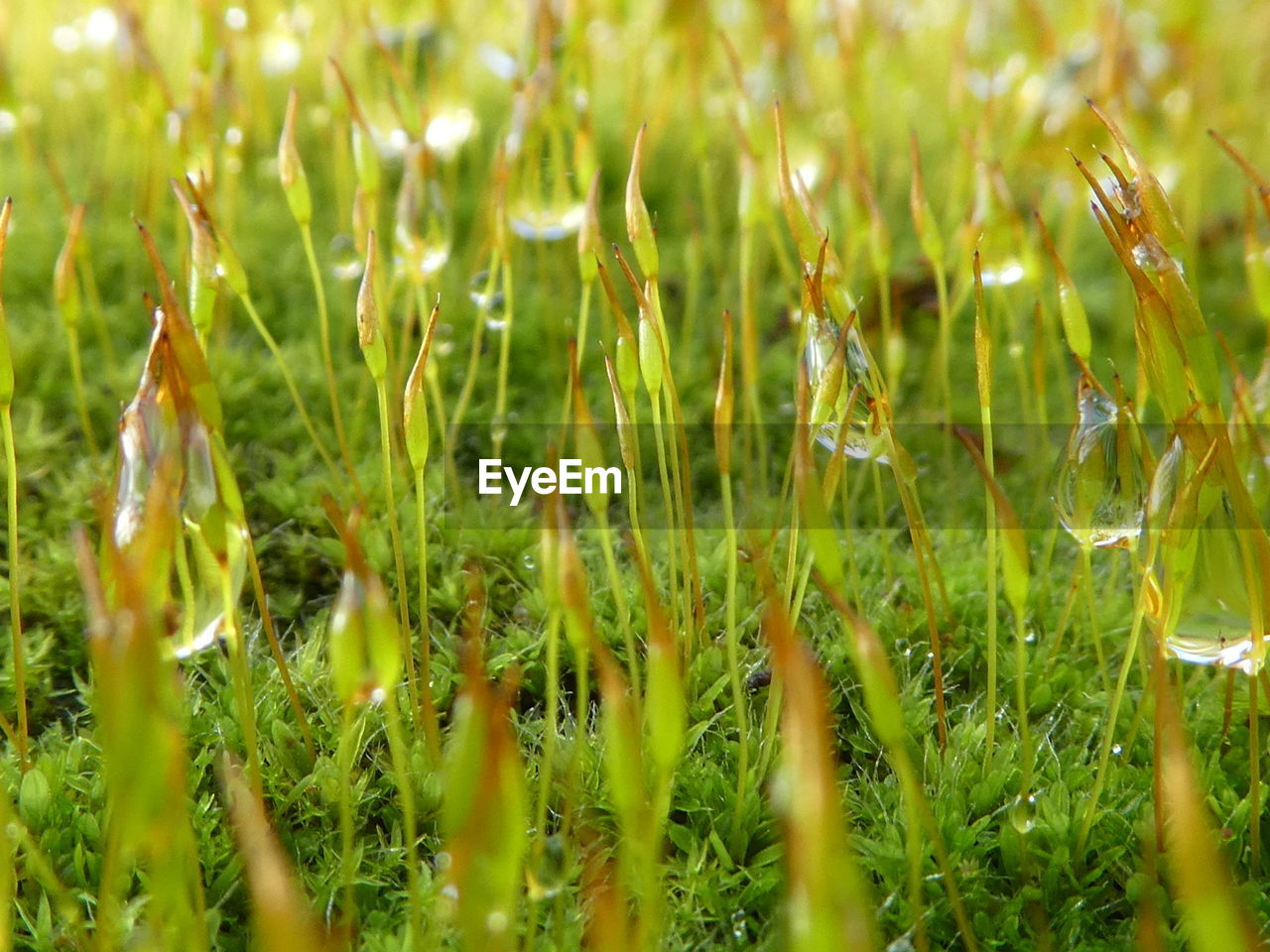 growth, nature, grass, plant, green color, field, outdoors, beauty in nature, close-up, day, freshness, no people, tranquility, fragility