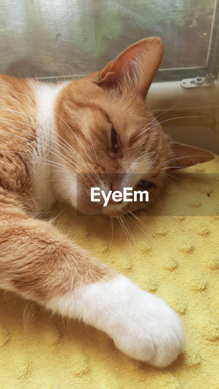 CLOSE-UP PORTRAIT OF A CAT SLEEPING