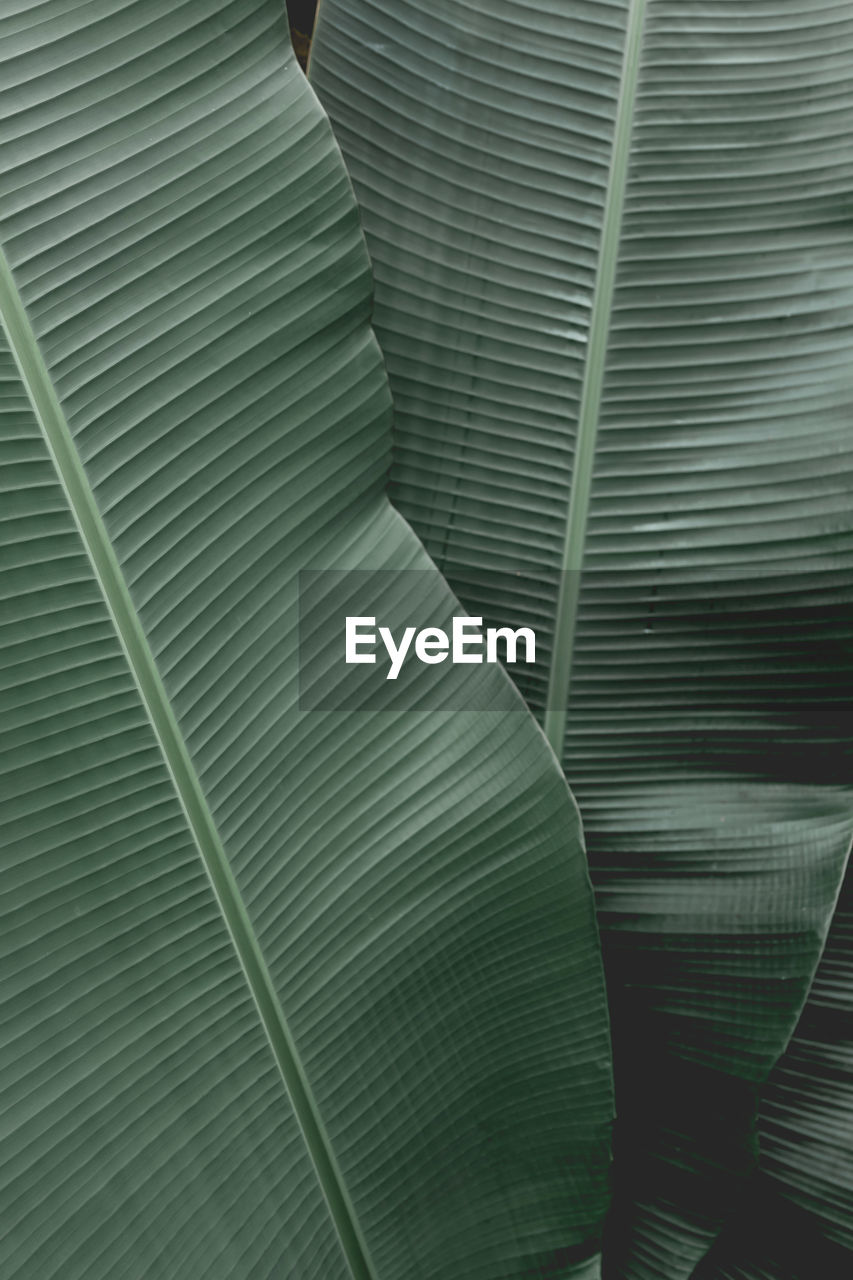 no people, pattern, close-up, full frame, backgrounds, day, textured, green color, outdoors, large group of objects, leaf, stack, textile, low angle view, plant, plant part, still life, nature, banana leaf, palm leaf
