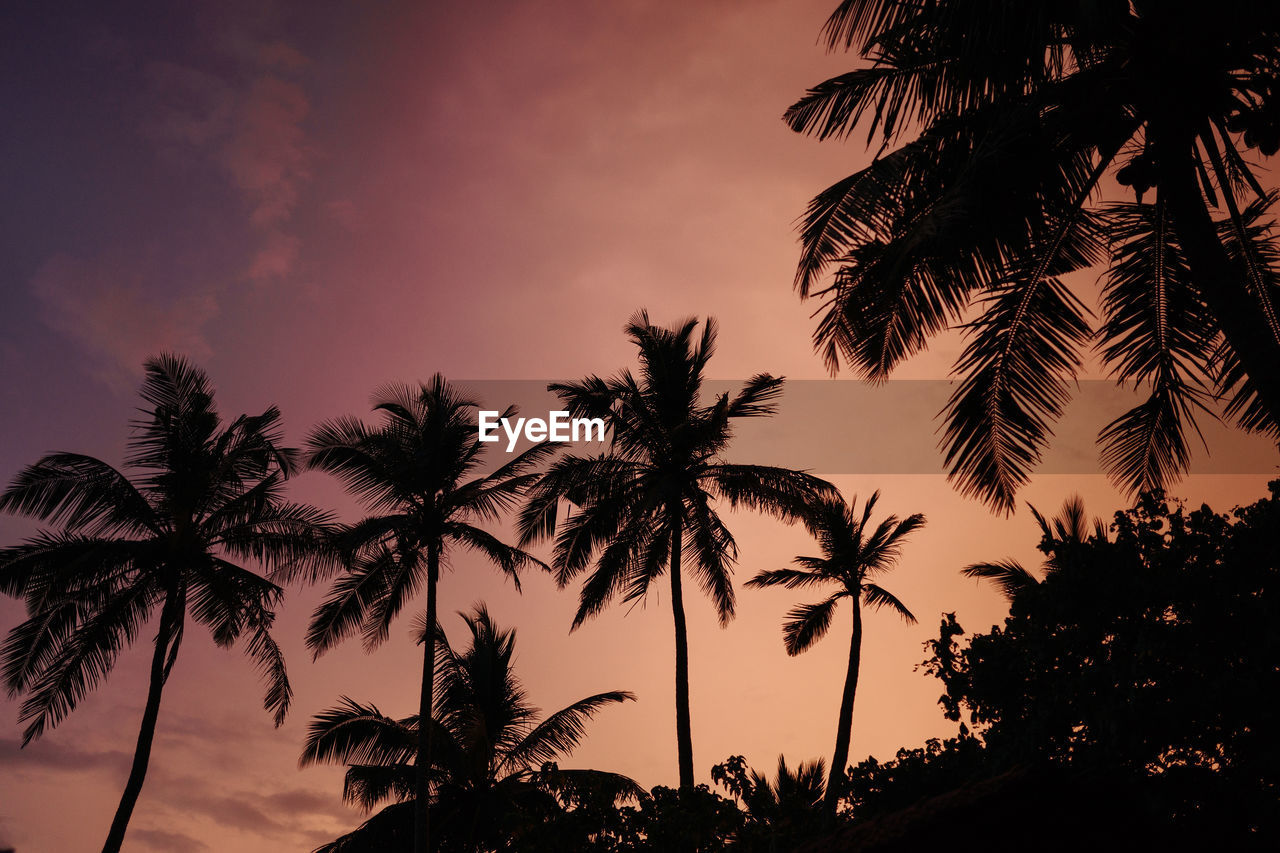 palm tree, tree, sunset, beauty in nature, sky, nature, scenics, silhouette, growth, low angle view, no people, tranquility, tree trunk, tranquil scene, palm frond, outdoors, day, close-up