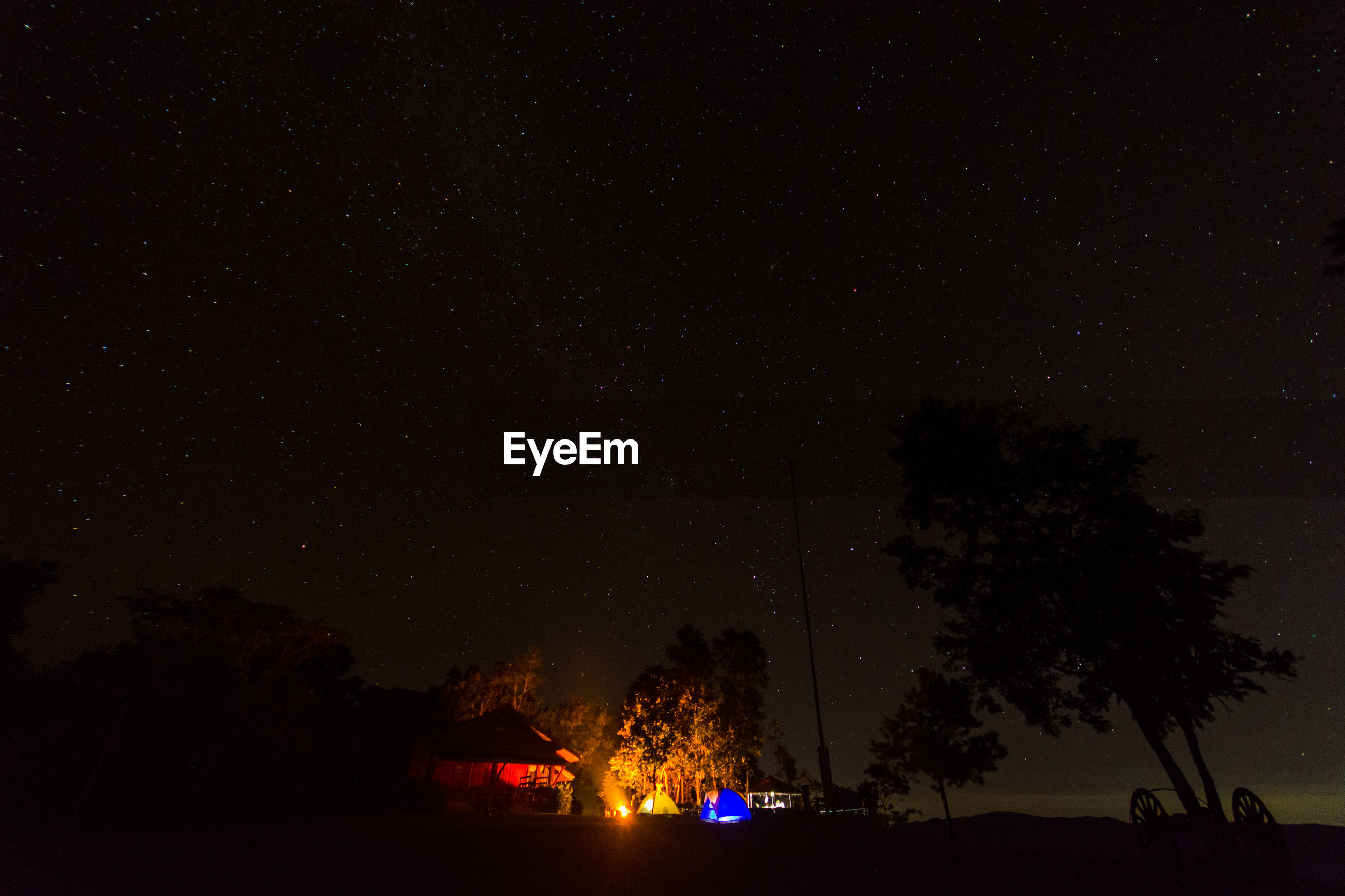 SILHOUETTE TREES AGAINST ILLUMINATED STAR FIELD AT NIGHT