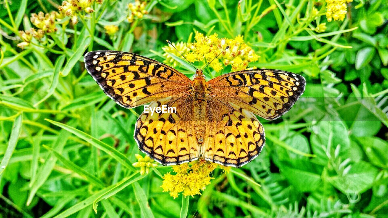 butterfly - insect, butterfly, insect, animal themes, animals in the wild, nature, high angle view, animal wing, one animal, beauty in nature, growth, wildlife, plant, fragility, no people, close-up, outdoors, animal markings, animal wildlife, yellow, green color, day, freshness, spread wings, flower, full length, pollination, leaf, grass, flower head, perching
