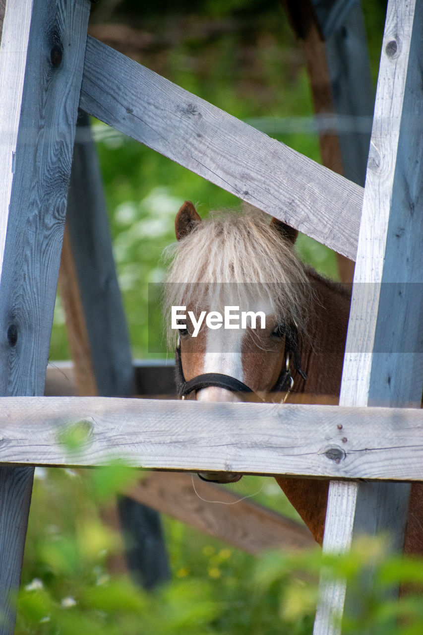 CLOSE-UP OF HORSE LOOKING AWAY IN STABLE