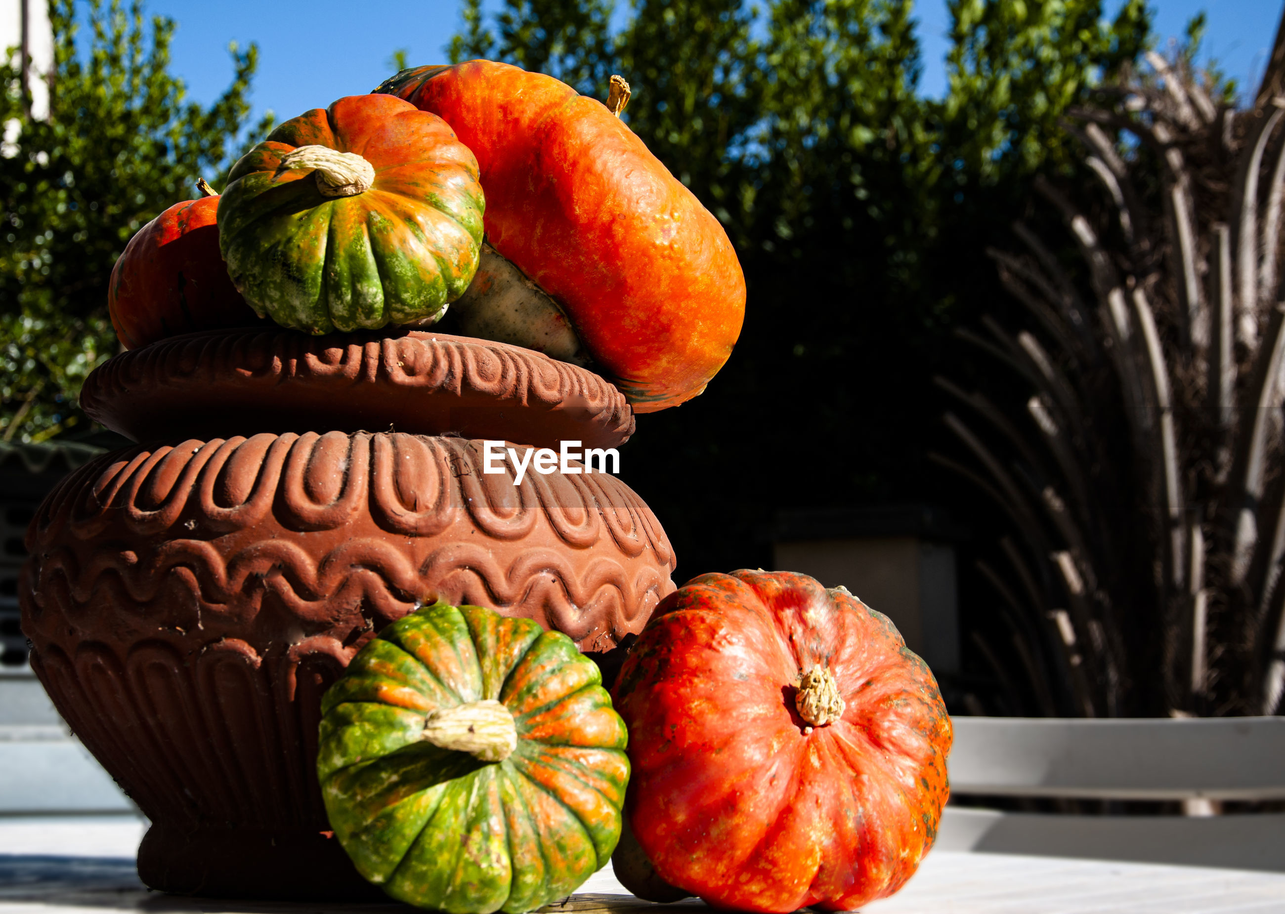 CLOSE-UP OF PUMPKINS IN GARDEN