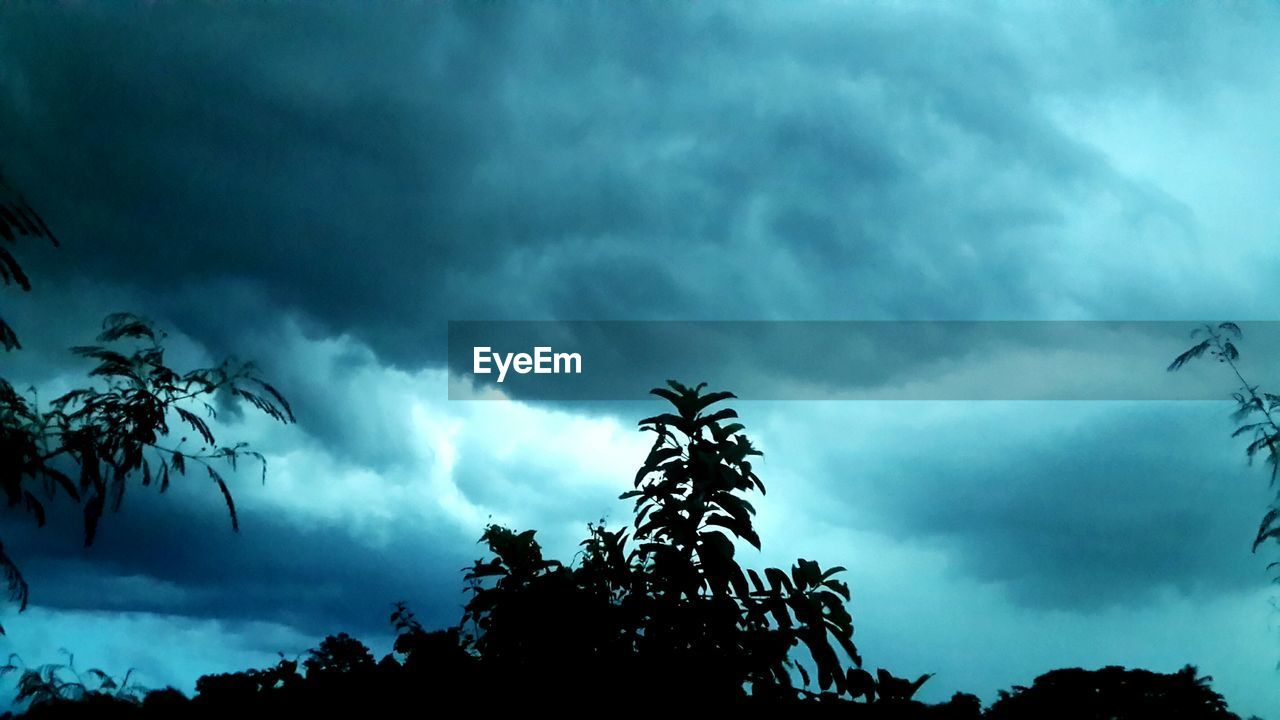 cloud - sky, tree, sky, low angle view, silhouette, nature, beauty in nature, growth, day, storm cloud, outdoors, no people, tranquility, scenics, branch