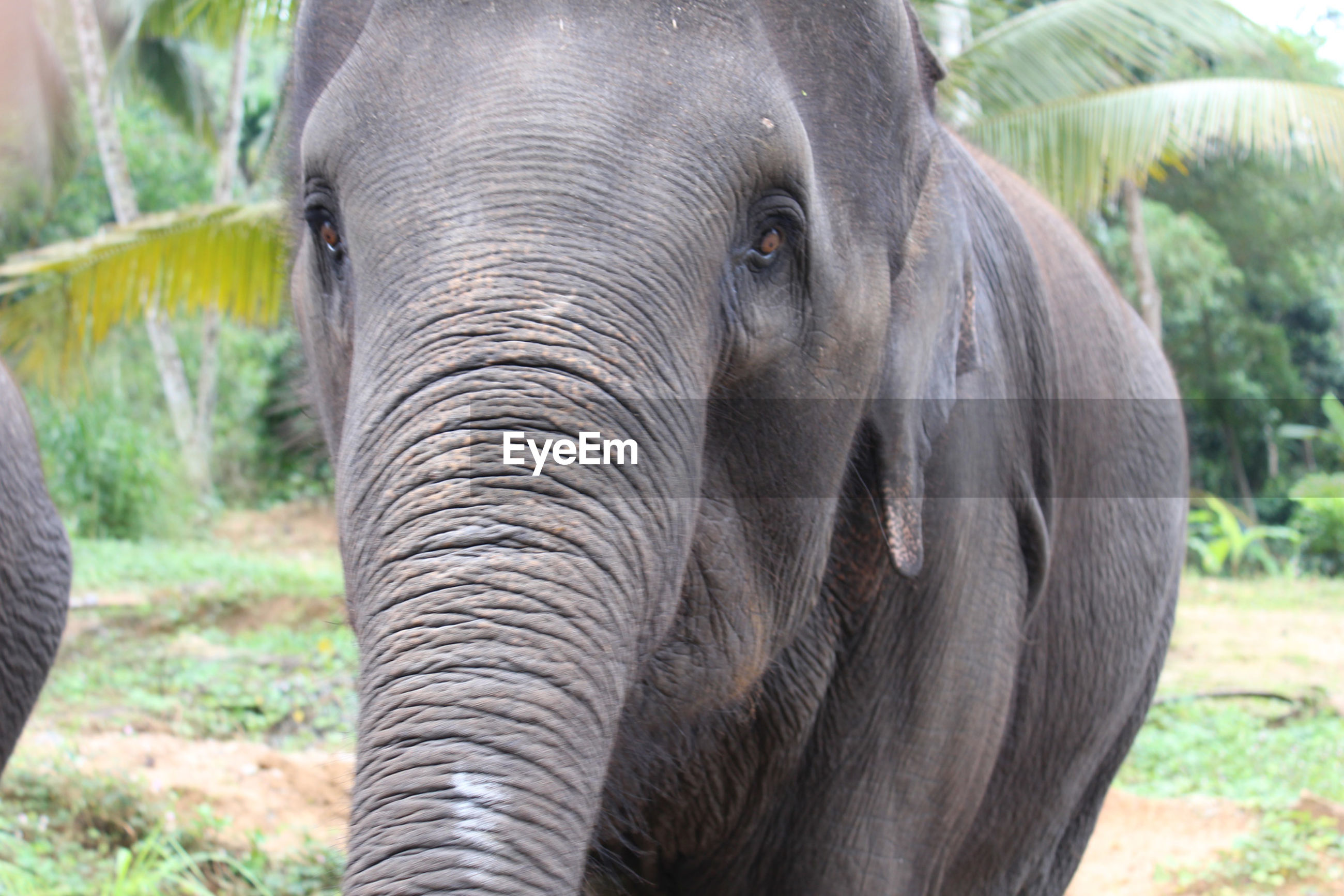 CLOSE-UP OF ELEPHANT IN PARK