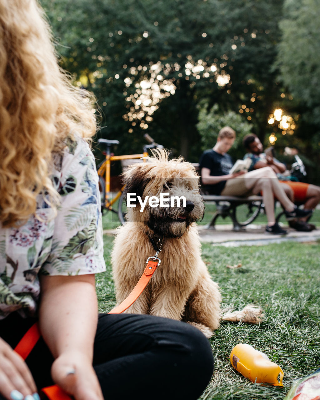Cropped image of woman with dog sitting in park