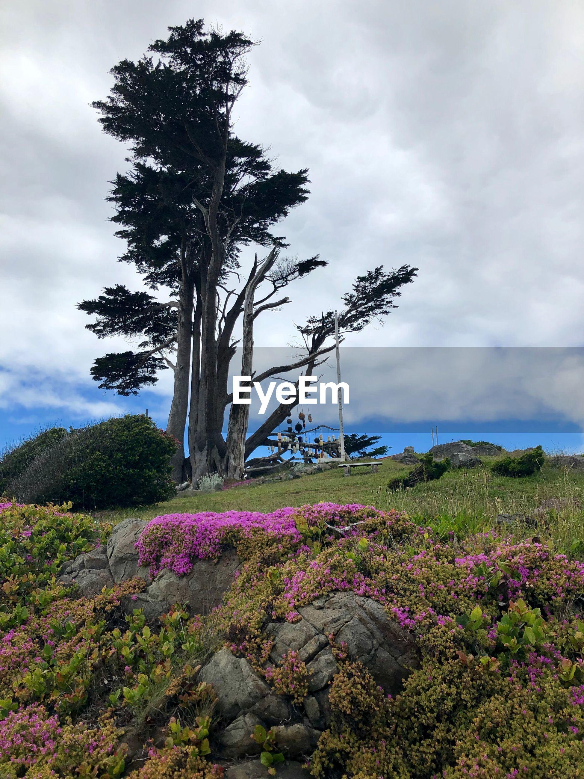 SCENIC VIEW OF PURPLE FLOWERING PLANTS ON FIELD