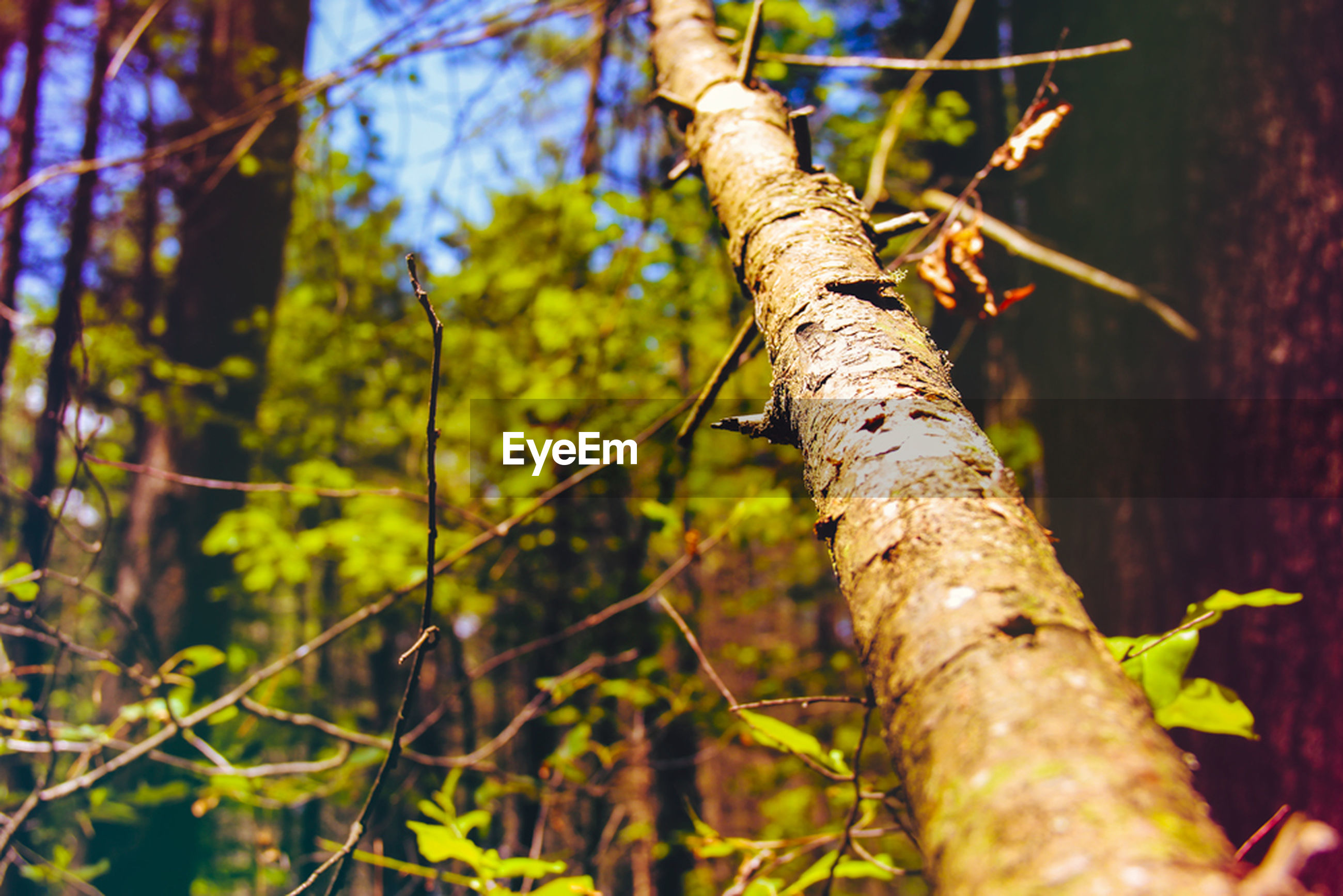 tree, focus on foreground, branch, growth, tree trunk, close-up, nature, leaf, forest, selective focus, tranquility, plant, day, outdoors, twig, no people, sunlight, green color, beauty in nature, stem