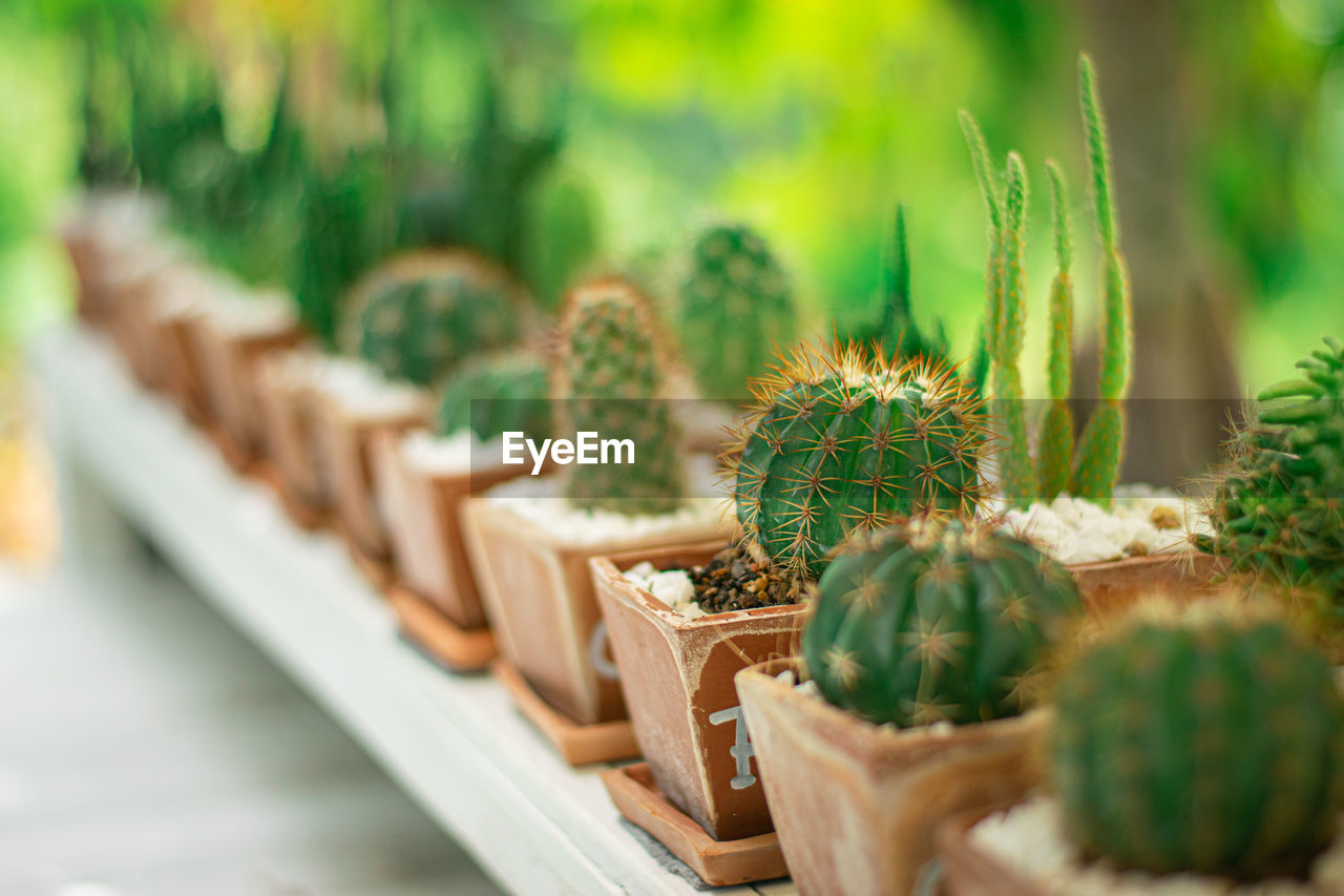 selective focus, green color, growth, plant, no people, cactus, succulent plant, day, in a row, nature, beauty in nature, potted plant, close-up, outdoors, wood - material, spiked, arrangement, thorn, sharp, botany