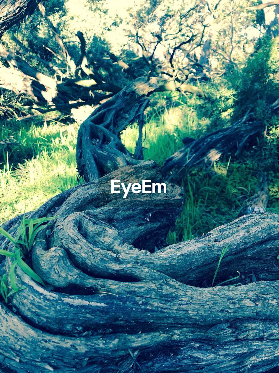 no people, tree, outdoors, day, field, grass, growth, nature, tree trunk, close-up, beauty in nature
