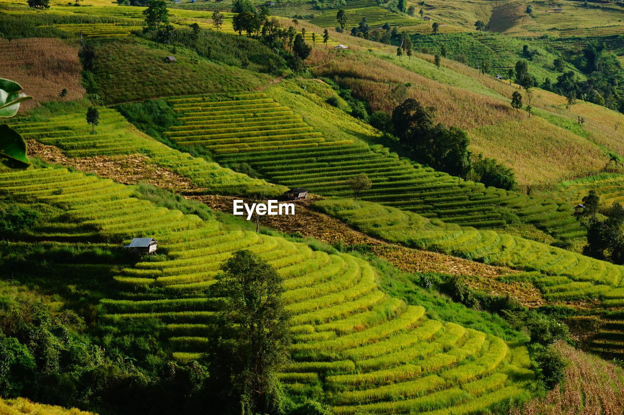 landscape, agriculture, rural scene, land, growth, scenics - nature, environment, green color, field, plant, crop, beauty in nature, farm, tranquility, tranquil scene, nature, plantation, terrace, terraced field, no people, tea crop, outdoors