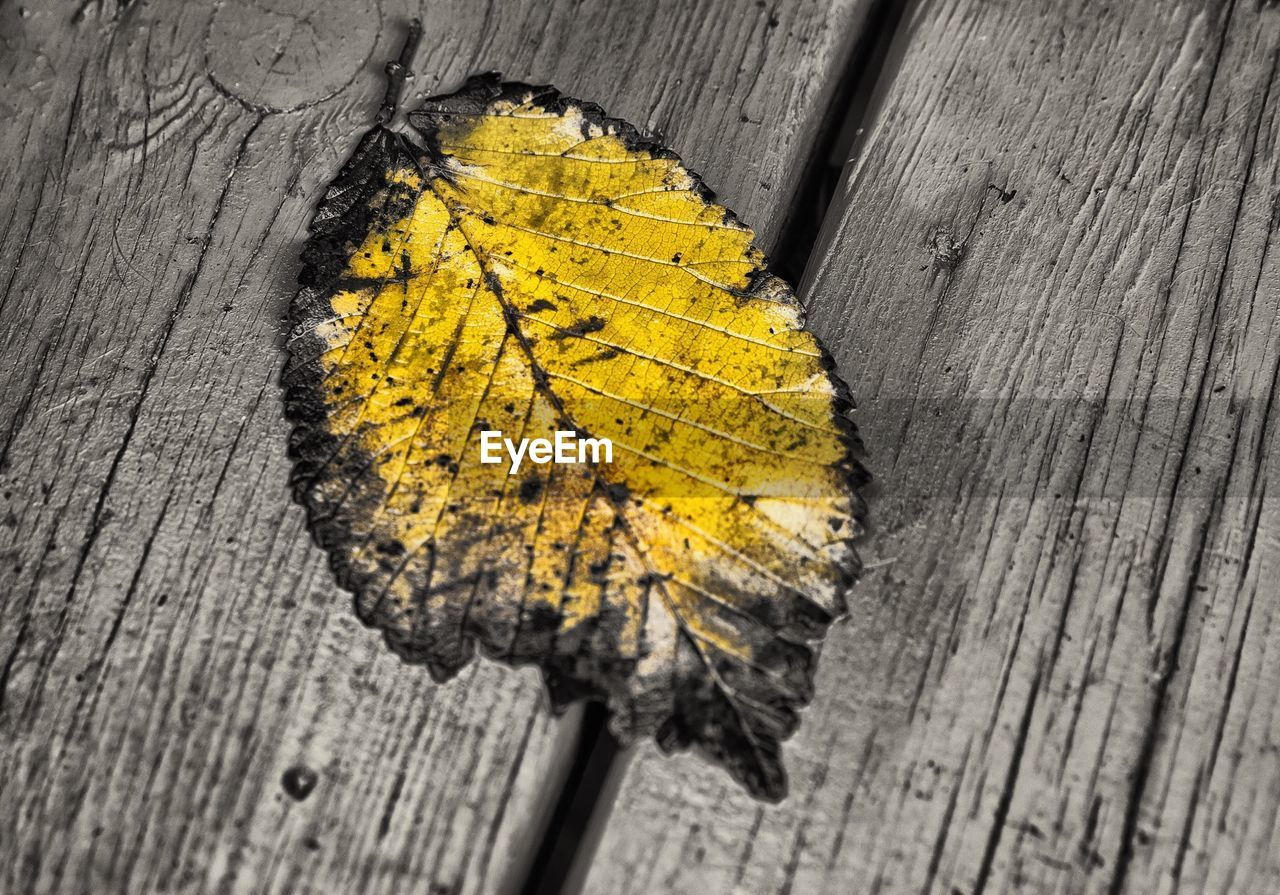 Dry Autumn Leaf On Wooden Planks