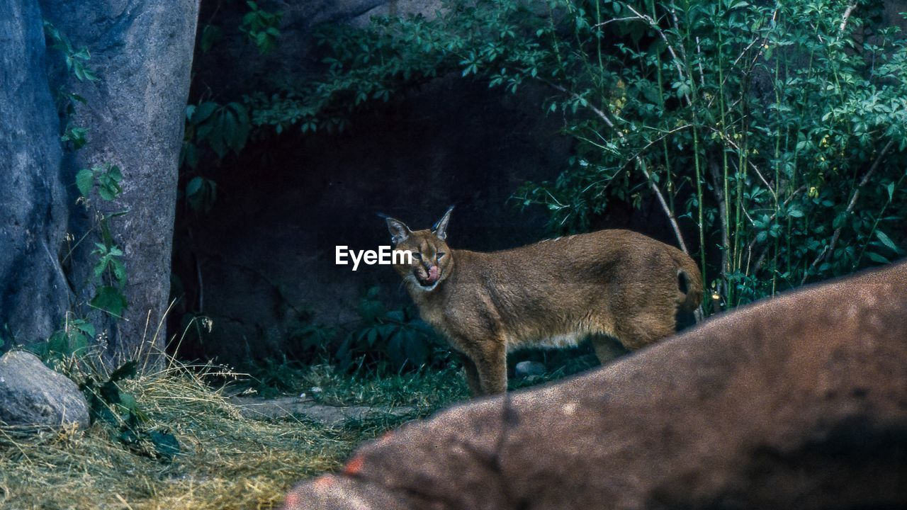mammal, animal, animal themes, one animal, vertebrate, plant, domestic animals, pets, domestic, feline, cat, tree, no people, nature, domestic cat, looking at camera, animal wildlife, day, animals in the wild, land, outdoors