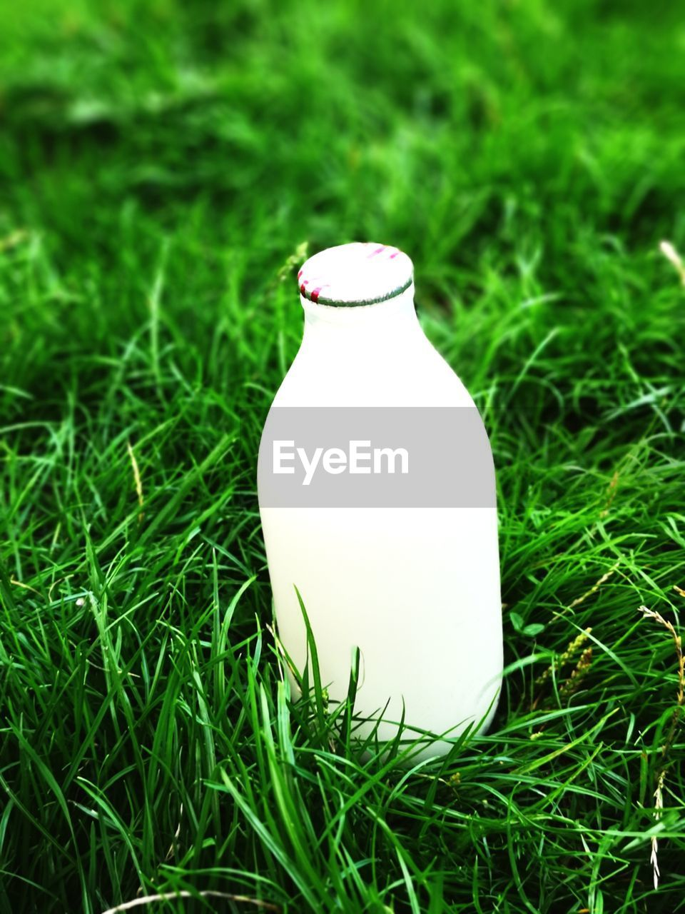 grass, green color, plant, no people, nature, bottle, white color, container, field, focus on foreground, close-up, day, land, food and drink, growth, single object, outdoors, refreshment, food, milk bottle
