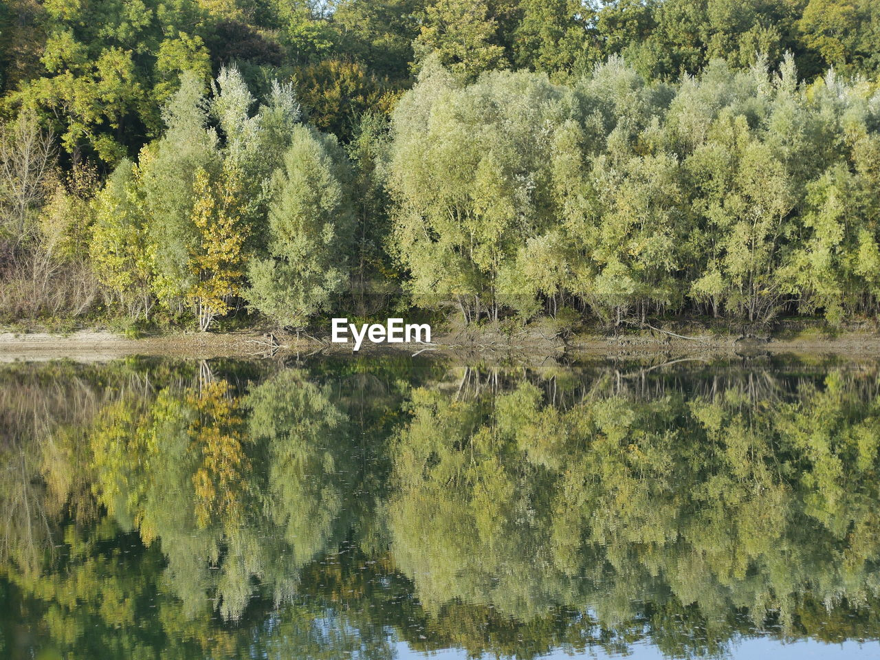 reflection, tree, lake, nature, water, waterfront, no people, green color, day, outdoors, beauty in nature, symmetry, sky