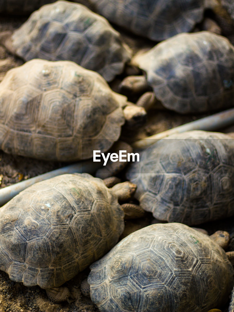 turtle, tortoise, animal wildlife, animal themes, shell, reptile, tortoise shell, animal shell, animal, animals in the wild, group of animals, vertebrate, close-up, nature, no people, day, focus on foreground, outdoors, beauty in nature, zoology