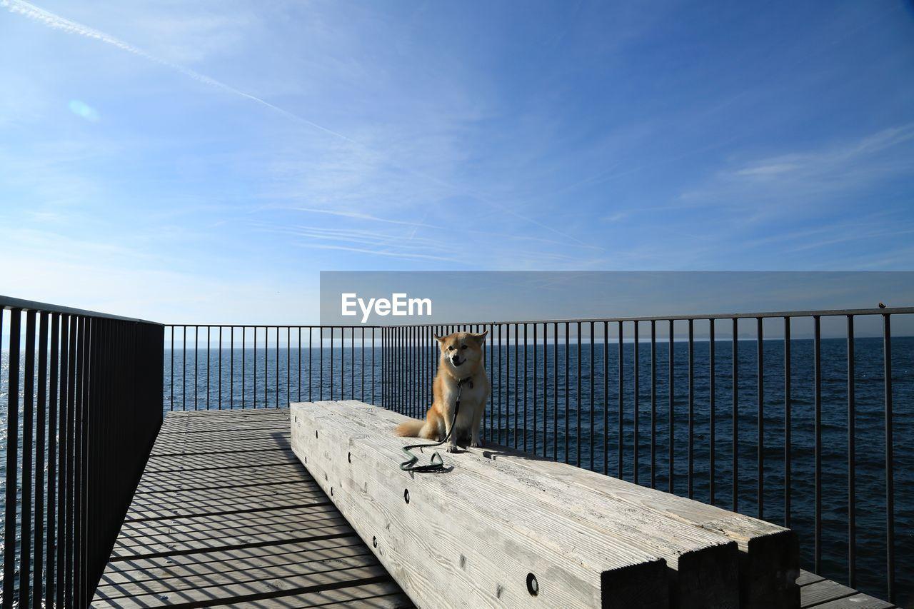 Portrait of dog against sky