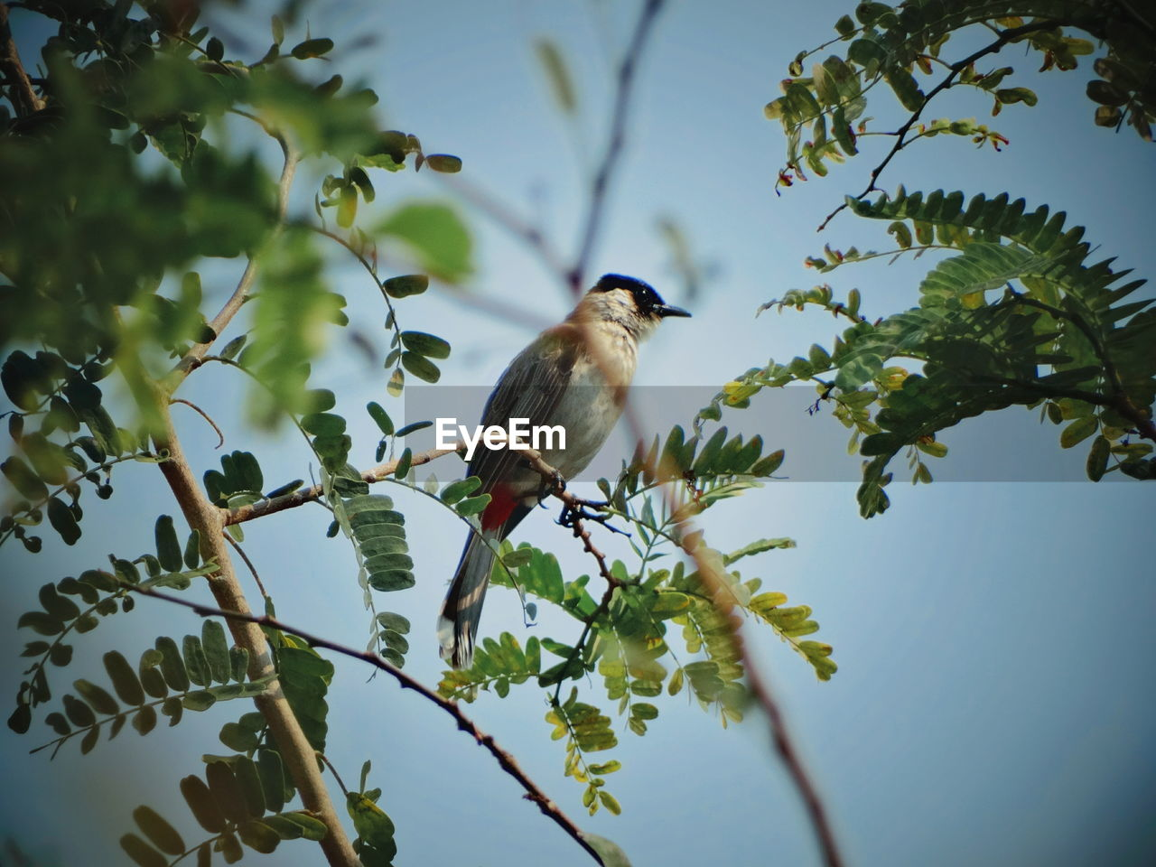 tree, vertebrate, animal themes, plant, animal wildlife, animal, animals in the wild, bird, perching, one animal, branch, low angle view, leaf, nature, plant part, no people, growth, day, sky, outdoors