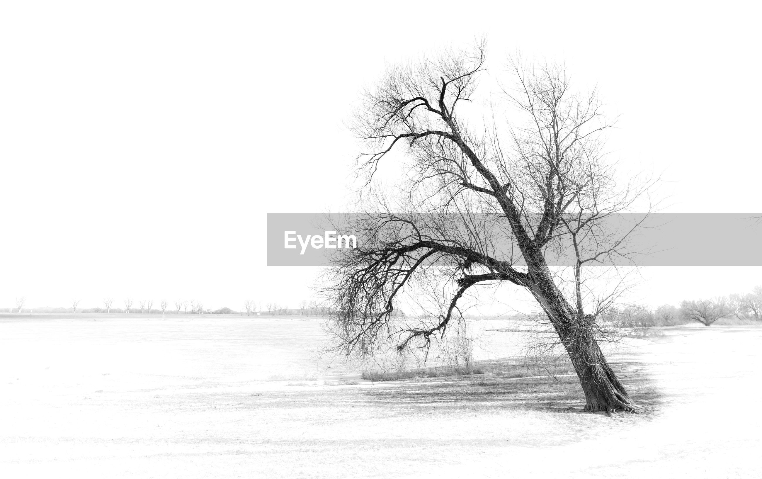 BARE TREE ON SNOW COVERED FIELD AGAINST CLEAR SKY