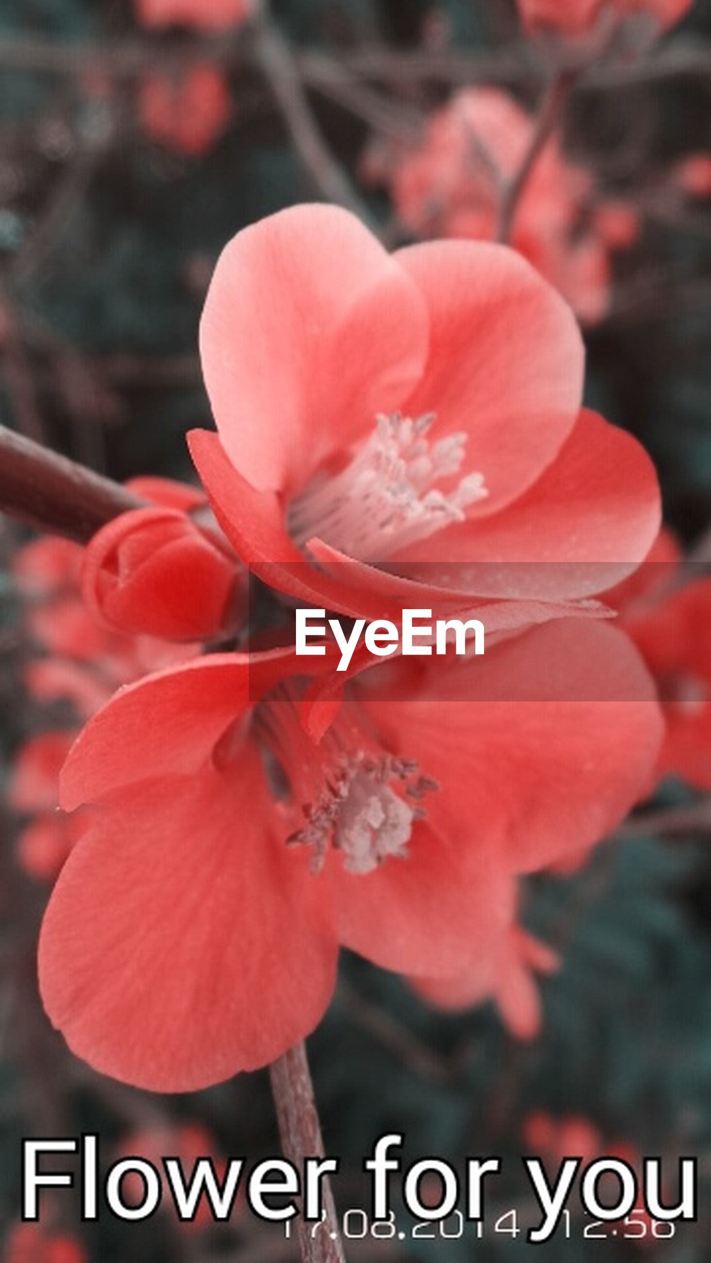 flower, focus on foreground, text, red, close-up, western script, freshness, communication, petal, flower head, growth, nature, outdoors, day, pink color, fragility, beauty in nature, non-western script, no people, orange color
