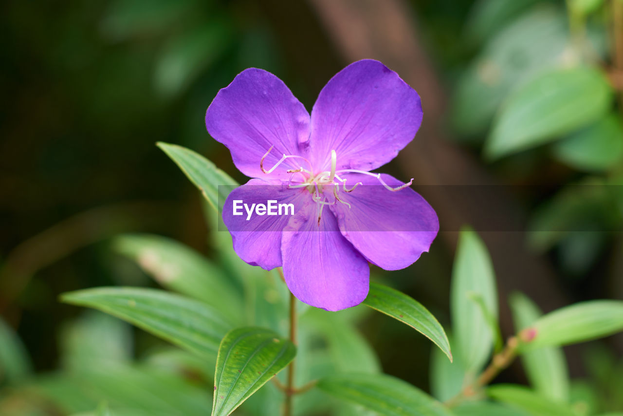 flowering plant, flower, plant, beauty in nature, freshness, growth, petal, vulnerability, fragility, close-up, flower head, purple, inflorescence, plant part, leaf, focus on foreground, nature, no people, green color, pollen