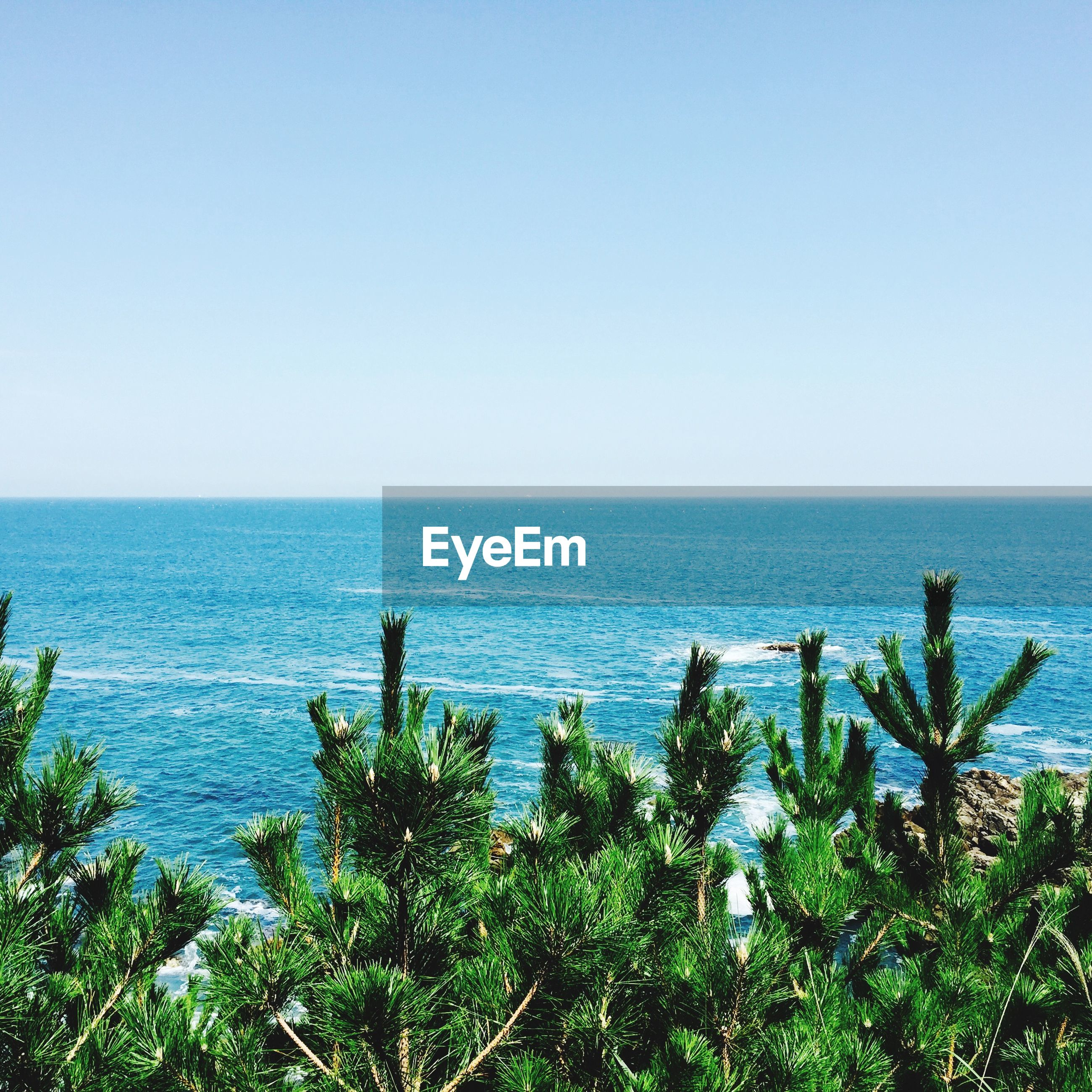 sea, horizon over water, water, clear sky, tranquil scene, tranquility, beauty in nature, copy space, nature, scenics, plant, blue, growth, idyllic, beach, day, seascape, no people, outdoors, shore