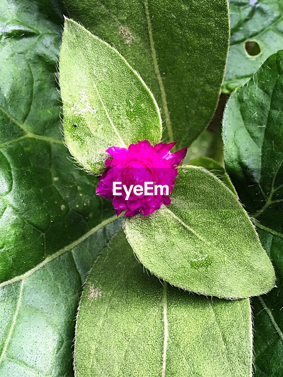 leaf, growth, green color, nature, beauty in nature, freshness, close-up, day, no people, outdoors, fragility, flower, petal, plant, flower head
