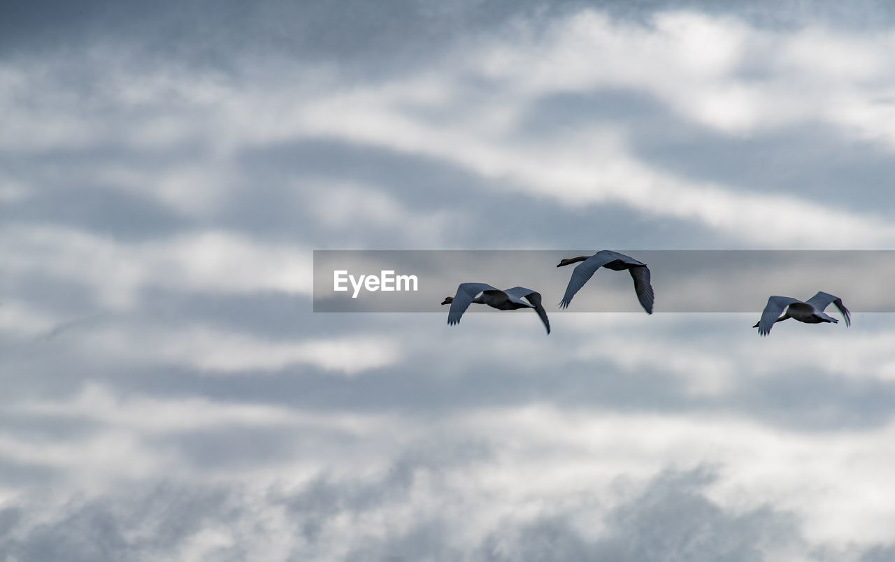 animal wildlife, animal themes, animals in the wild, animal, bird, vertebrate, flying, cloud - sky, spread wings, group of animals, sky, mid-air, no people, nature, low angle view, beauty in nature, day, two animals, motion, seagull