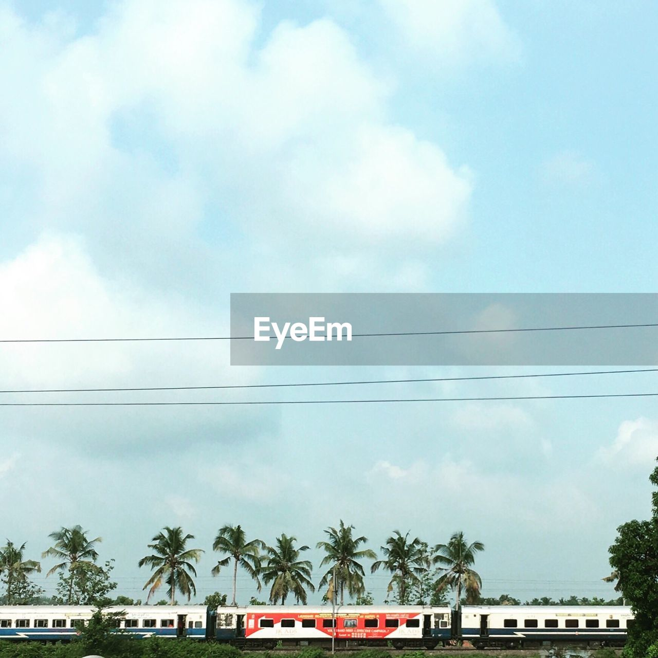 Train by coconut palm trees against cloudy sky
