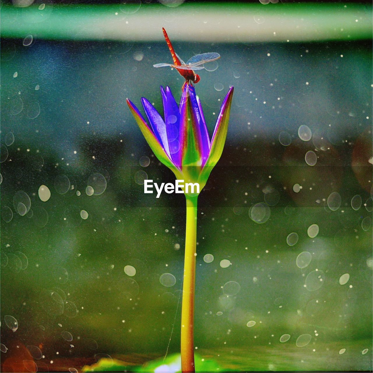 water, drop, wet, insect, fragility, leaf, no people, nature, close-up, one animal, animal themes, day, green color, freshness, flower, outdoors, beauty in nature, plant, animals in the wild, growth, flower head