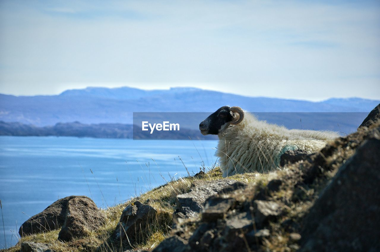 Side View Of Sheep Standing On Mountain By River Against Sky