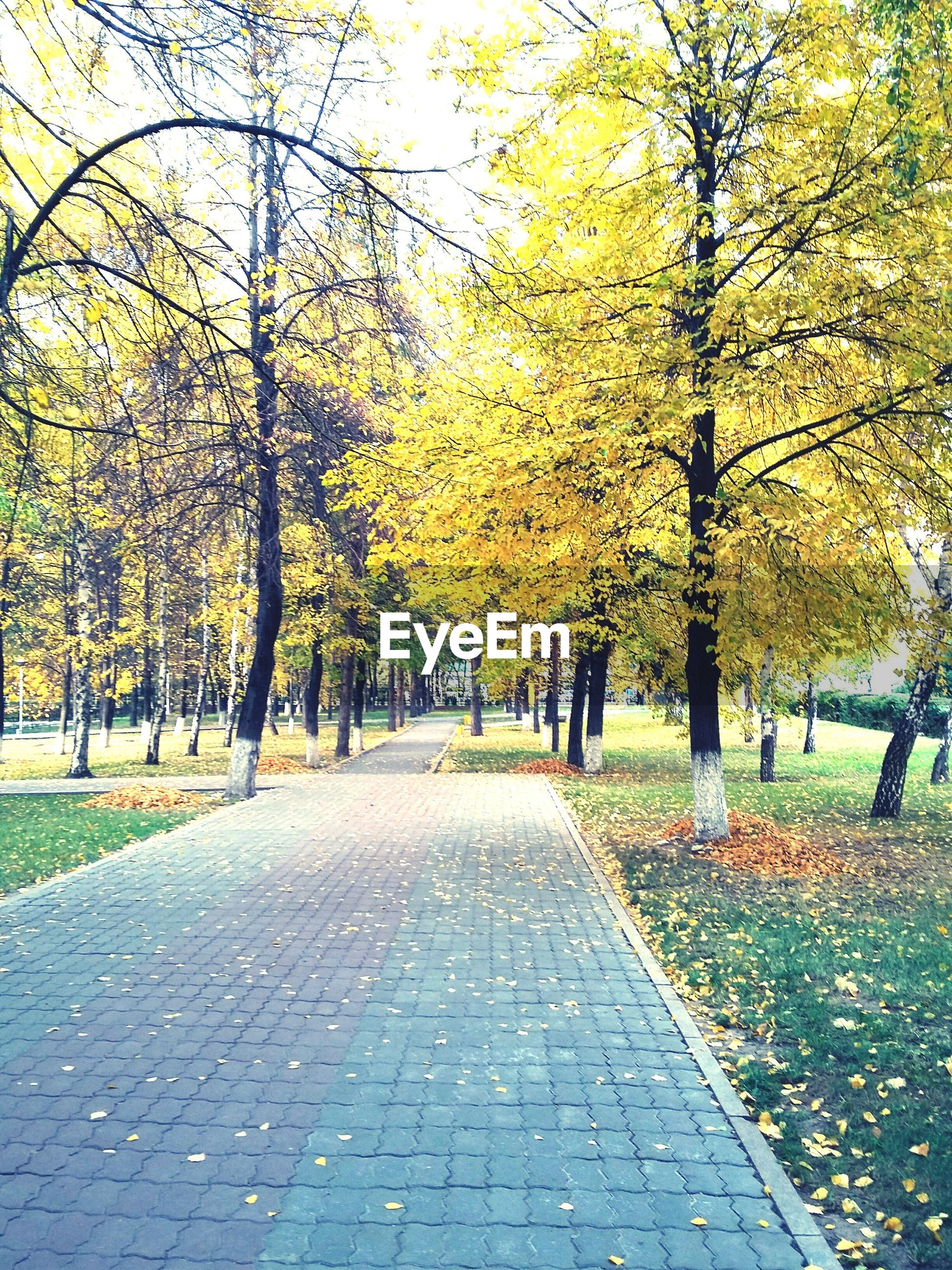 tree, autumn, the way forward, change, season, branch, treelined, diminishing perspective, tranquility, park - man made space, leaf, yellow, footpath, growth, nature, transportation, beauty in nature, vanishing point, road, tranquil scene