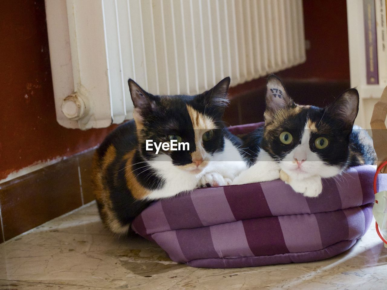 Cats relaxing in pet bed at home