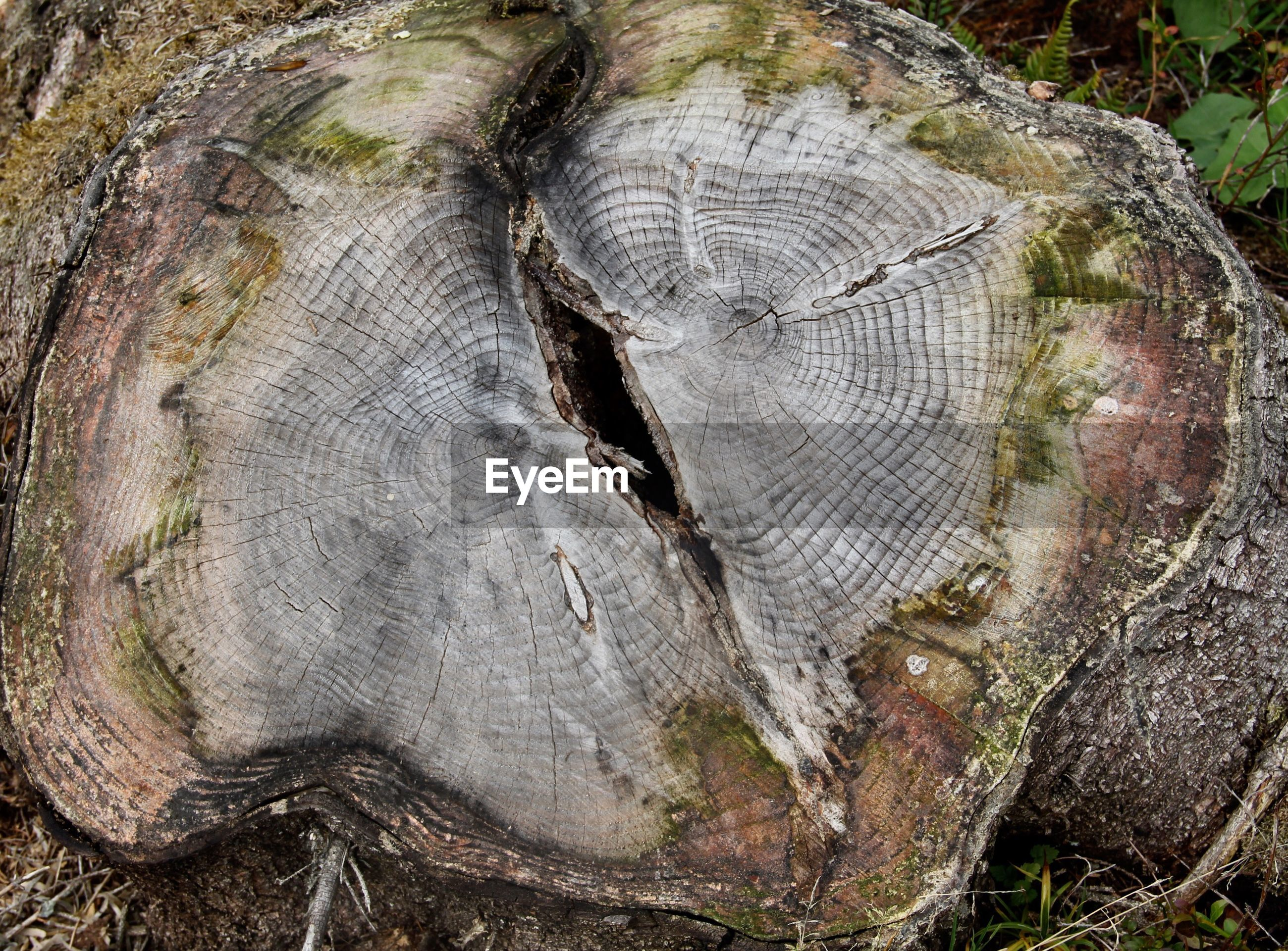 CLOSE-UP OF TREE STUMP ON LOG