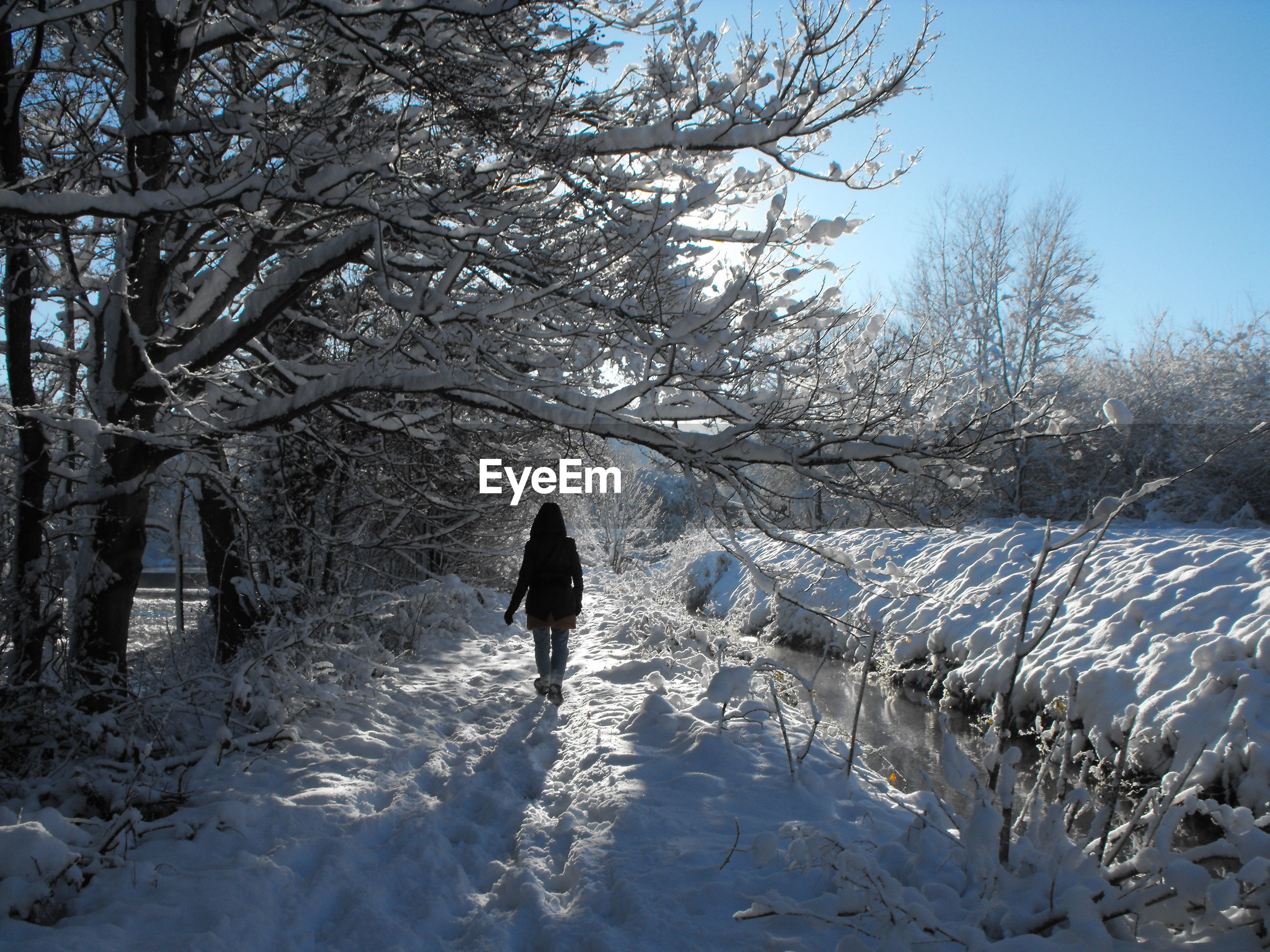 Rear view of woman walking on snow covered land by bare trees