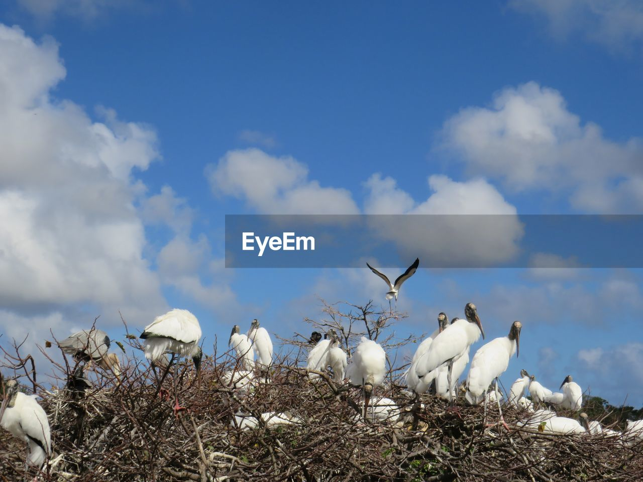cloud - sky, sky, white color, day, nature, animal themes, animals in the wild, outdoors, bird, no people, beauty in nature