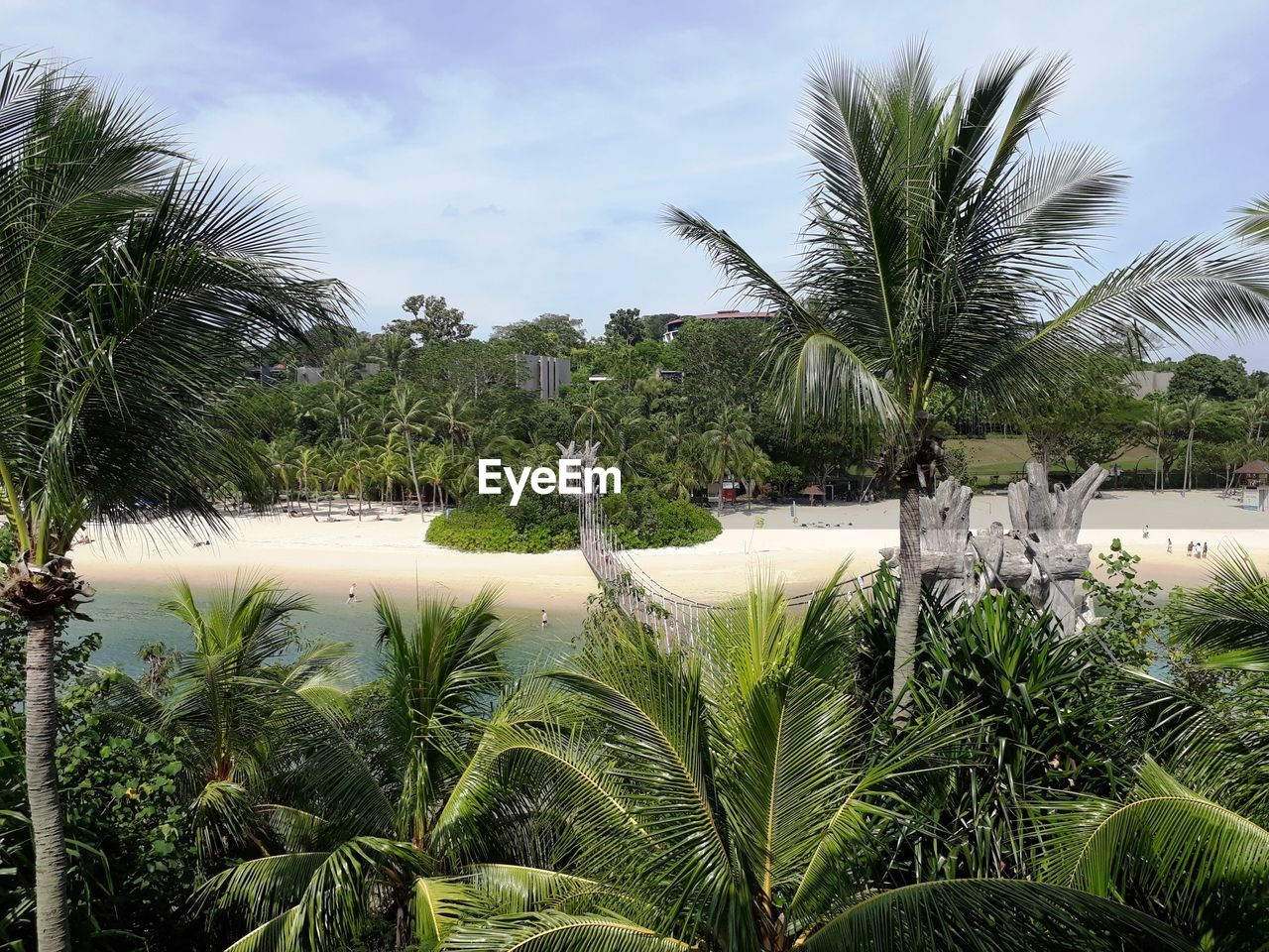 palm tree, tree, growth, water, plant, nature, tranquility, beauty in nature, no people, green color, sky, day, outdoors, scenics