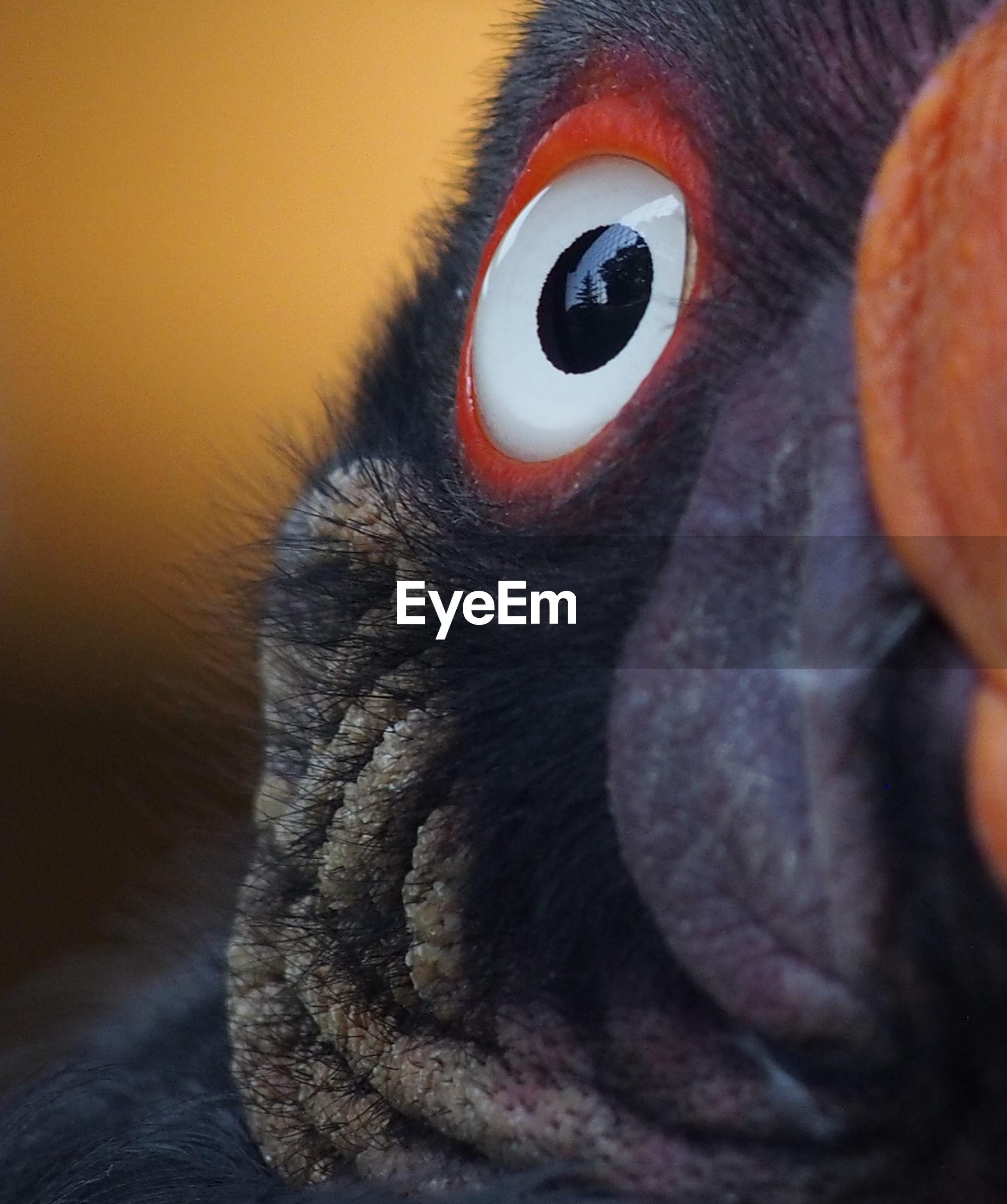 Close-up of bird eye