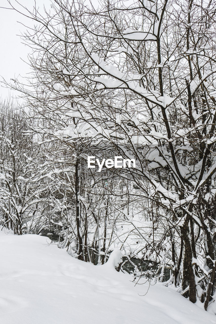 snow, winter, cold temperature, tree, bare tree, plant, beauty in nature, nature, covering, branch, tranquility, white color, land, no people, environment, scenics - nature, tranquil scene, day, frozen, outdoors, extreme weather