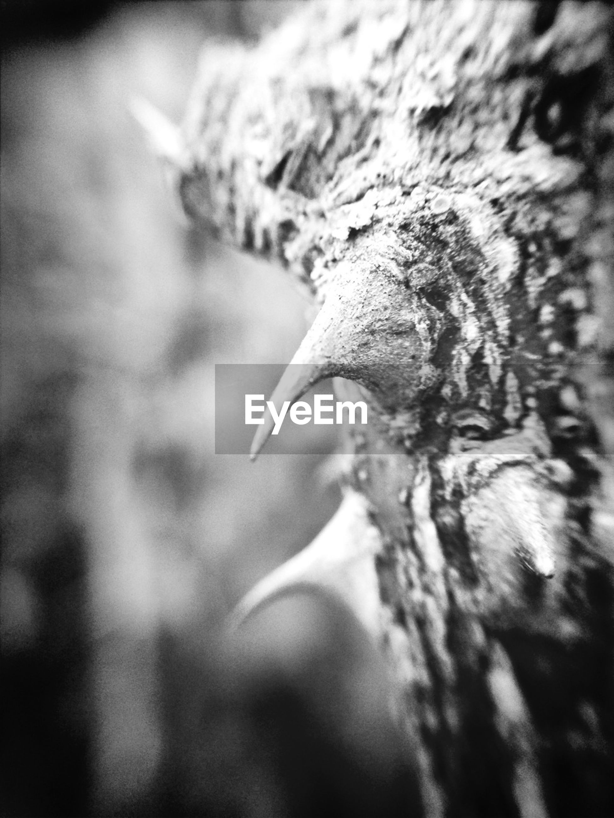 close-up, selective focus, textured, nature, focus on foreground, tree trunk, wood - material, leaf, growth, bark, one animal, day, outdoors, natural pattern, dry, wildlife, lizard, rough, no people, part of